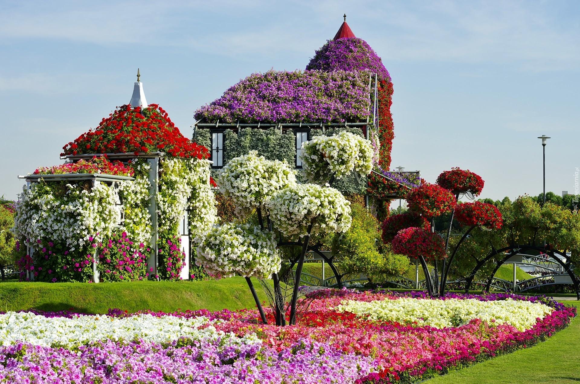 Ogrody Dubaju Wiosna Kwitn Ce Drzewa Ekspozycje Kwiatowe