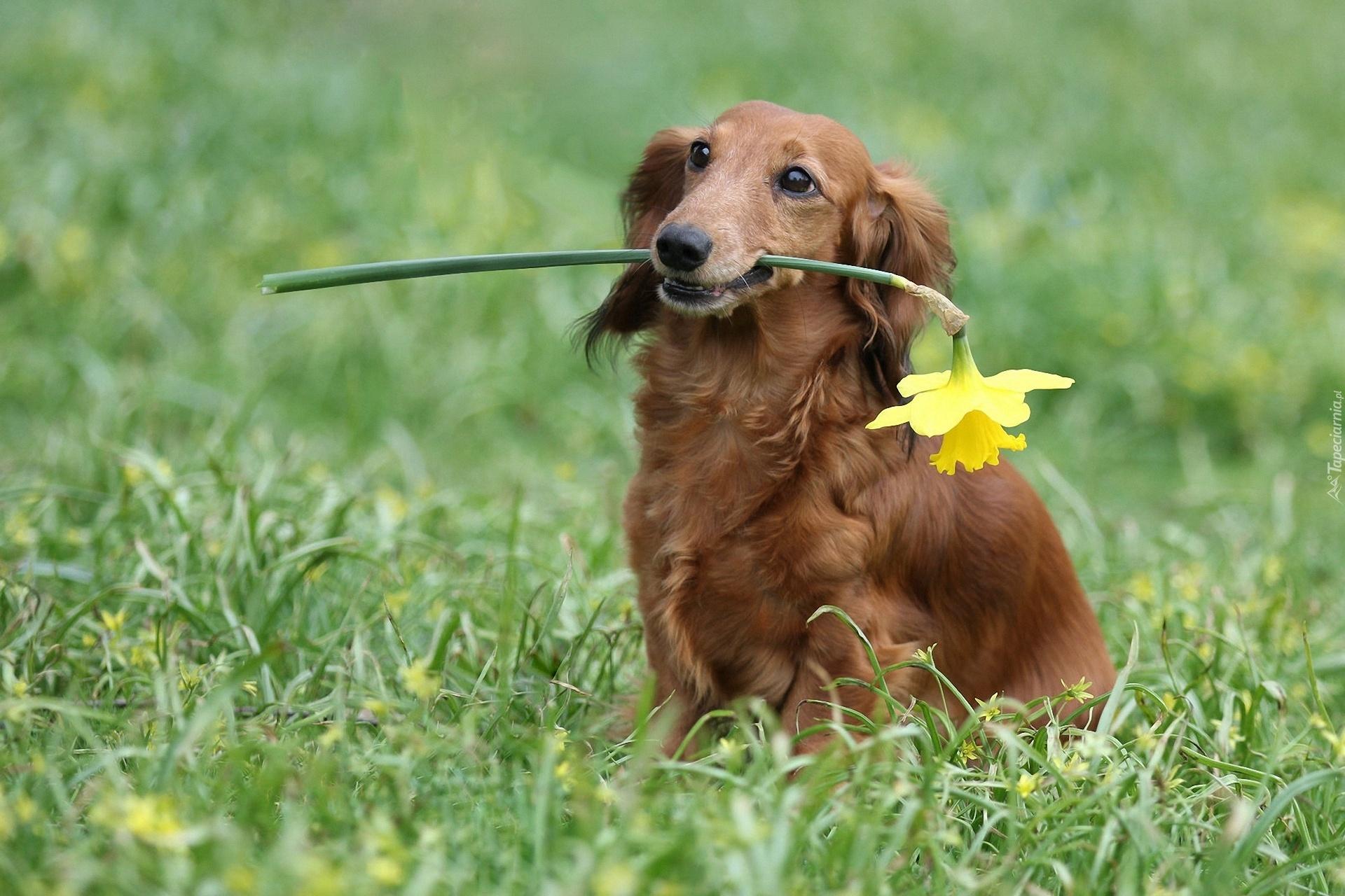 собака трава скачать