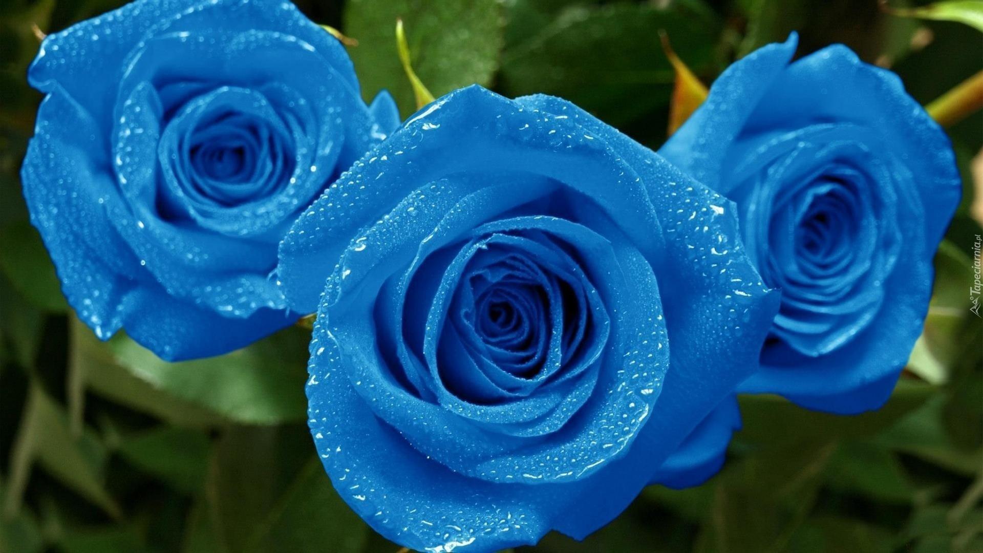 4f6409309be7c6 Niebieskie, Roze