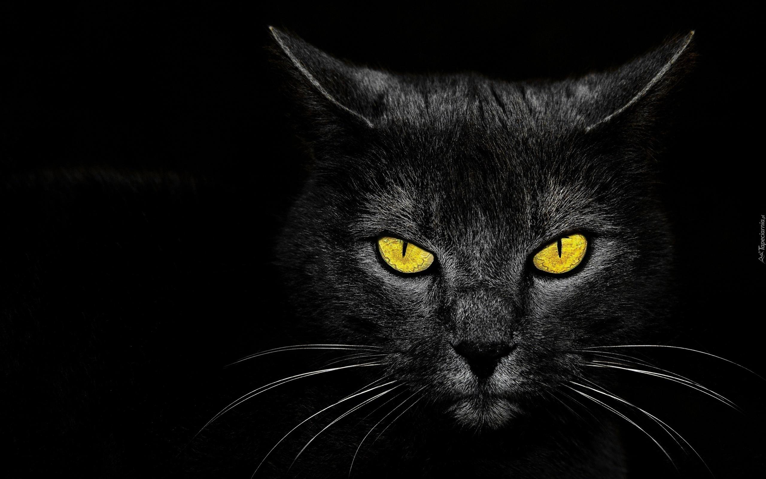 Czarny Kot Czarne Tło