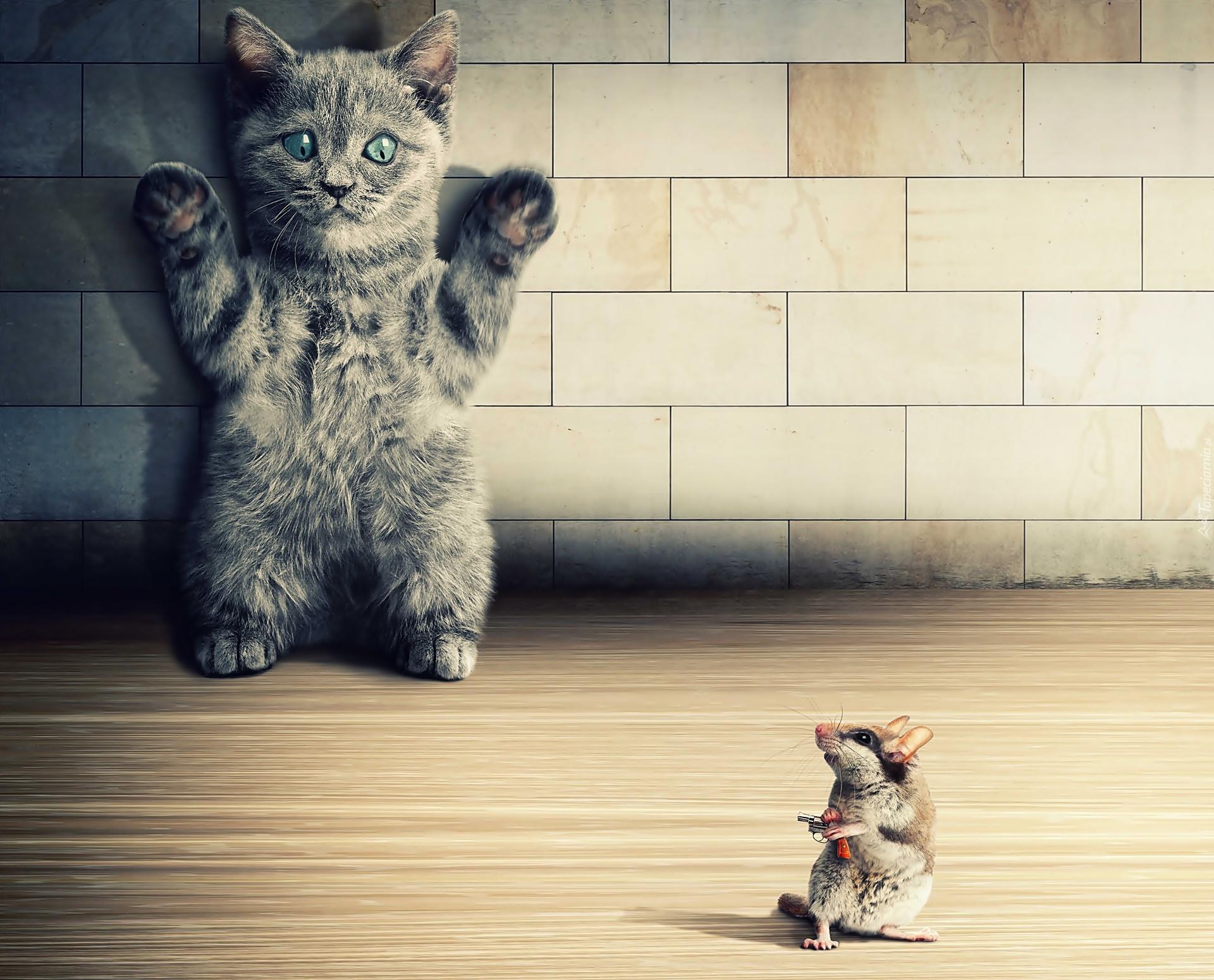Kot Mysz śmieszne