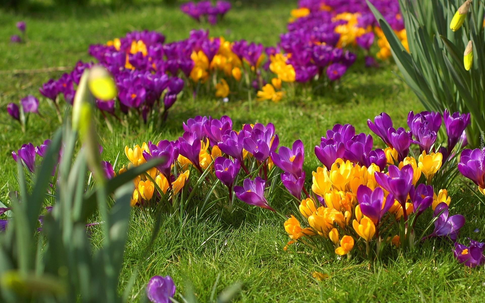 Самые красивые цветы в мире  LifeGlobe