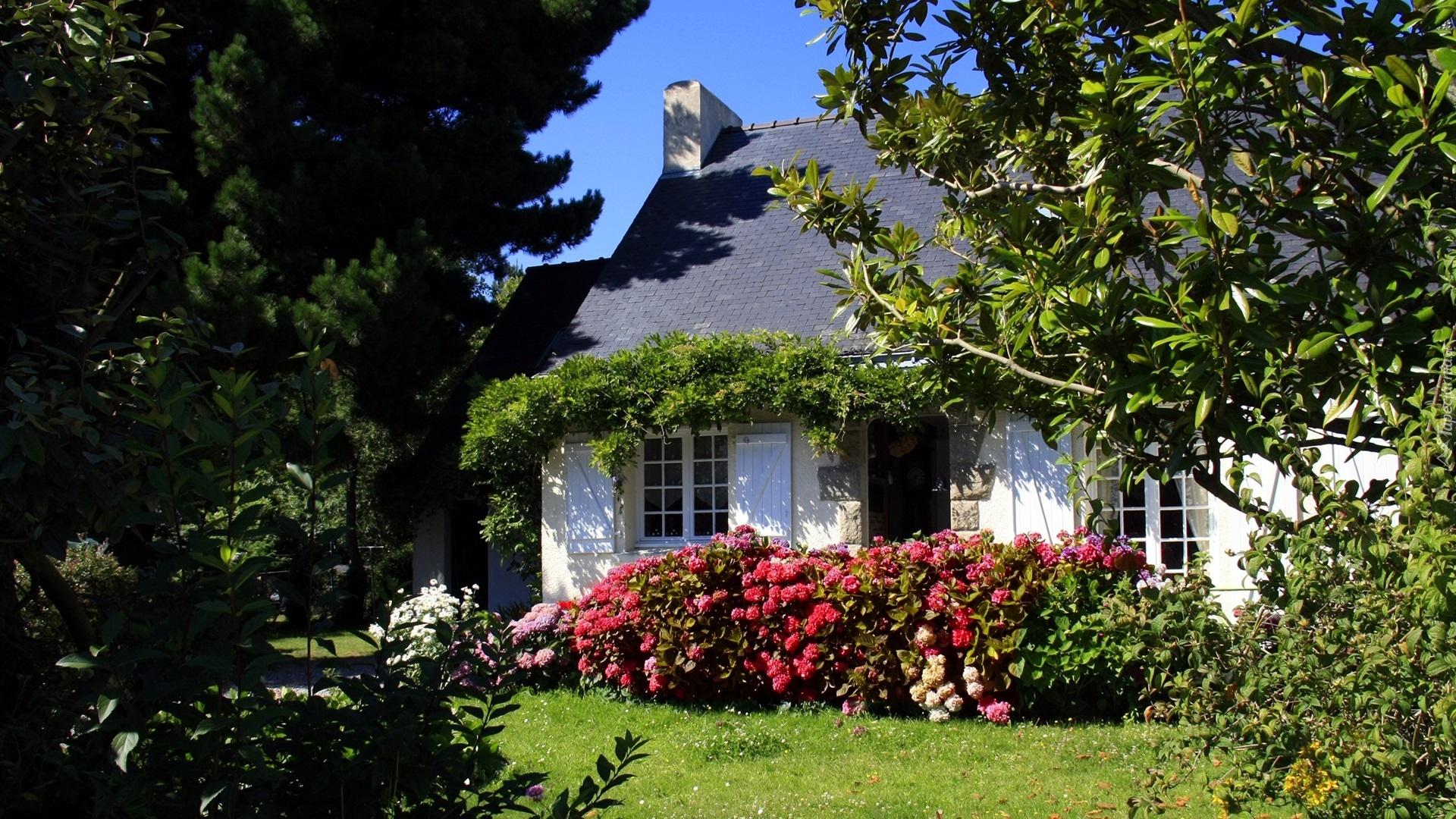 Wiejski, Domek, Ogród, Drzewa, Kwiaty