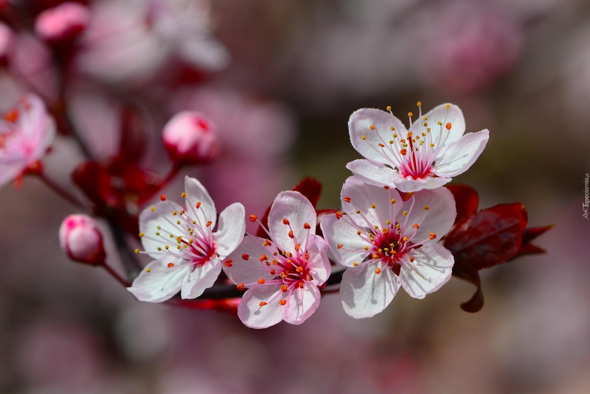 Чистяк весенний цветок без смс