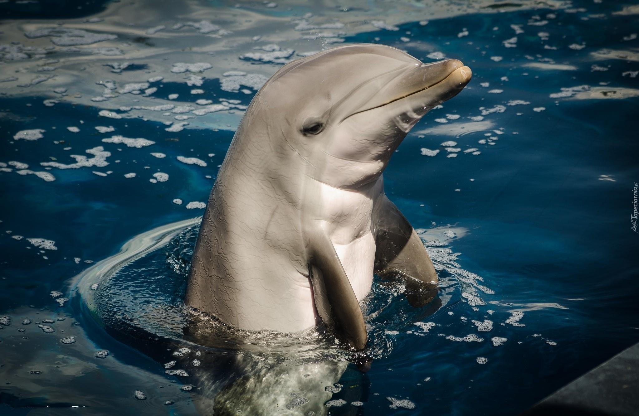 Новые фотки дельфины