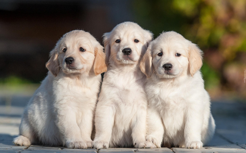 Cream Colored Dog Names