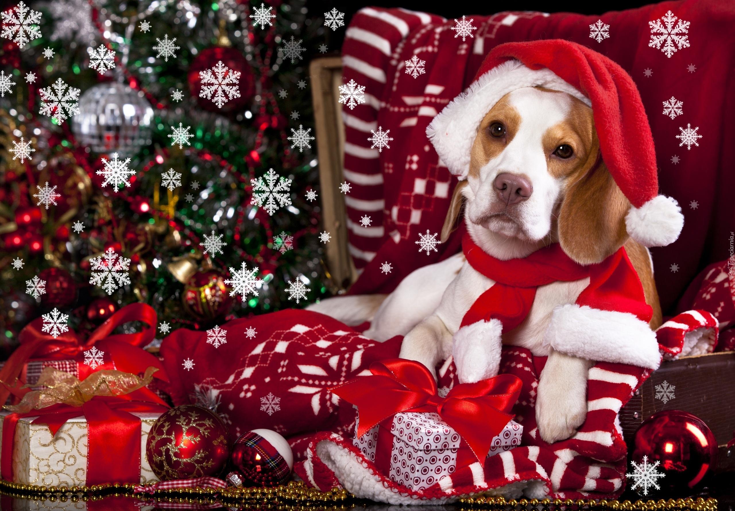 Картинки скачать бесплатно собак