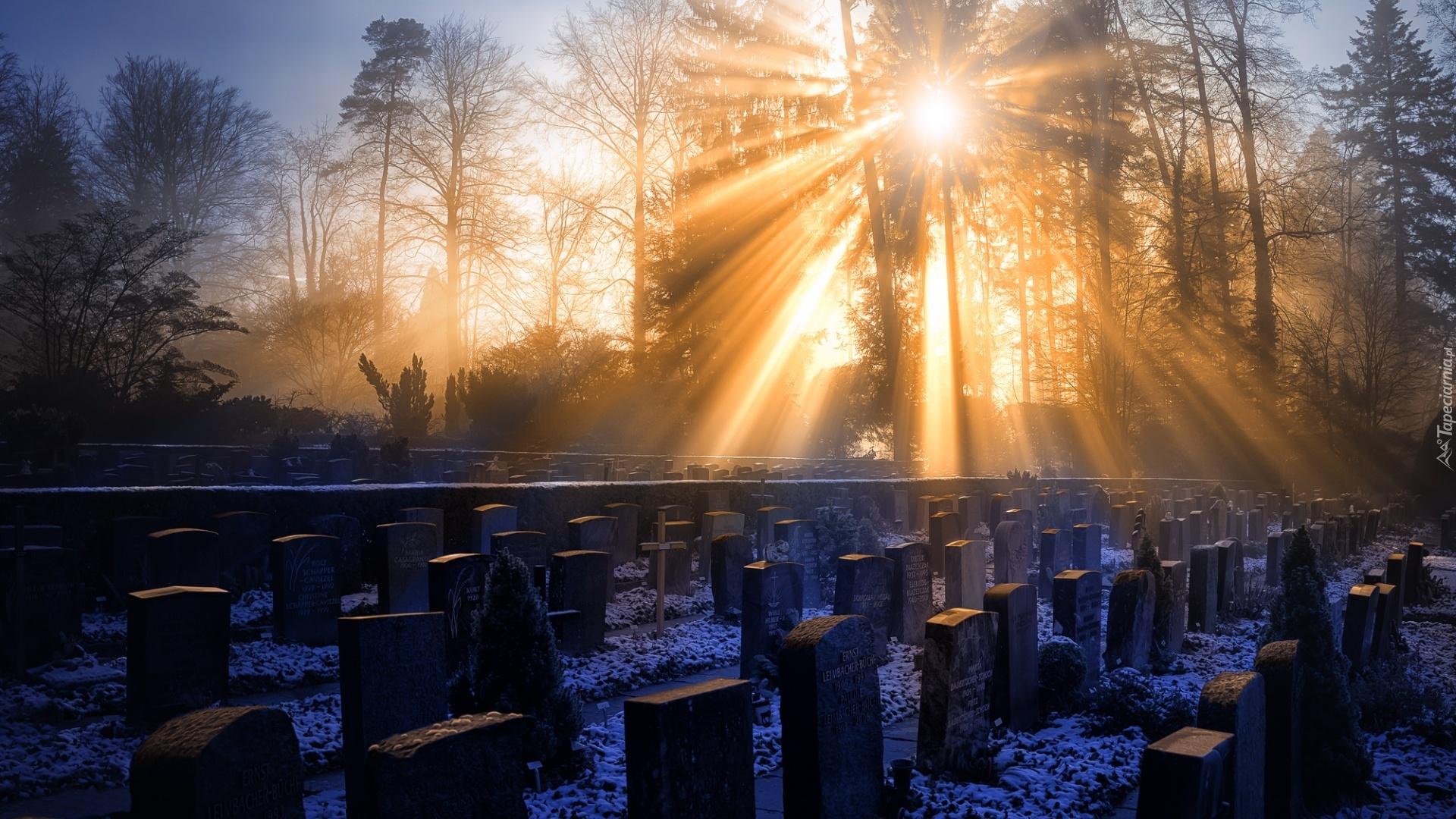 Niemiecki, Cmentarz, Zimą, Promienie, Słońca