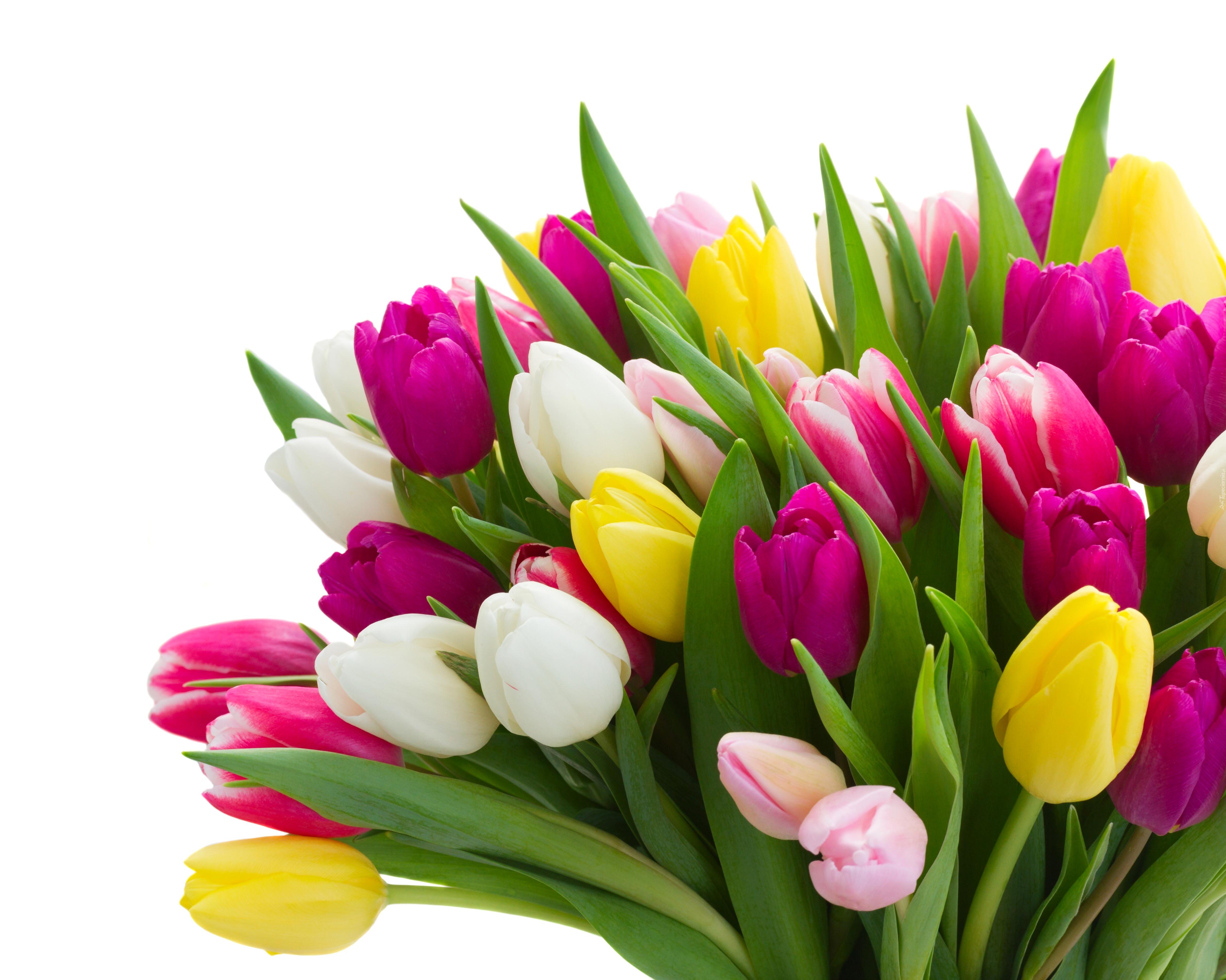 Букеты цветов розы тюльпаны  картинки фото  VK