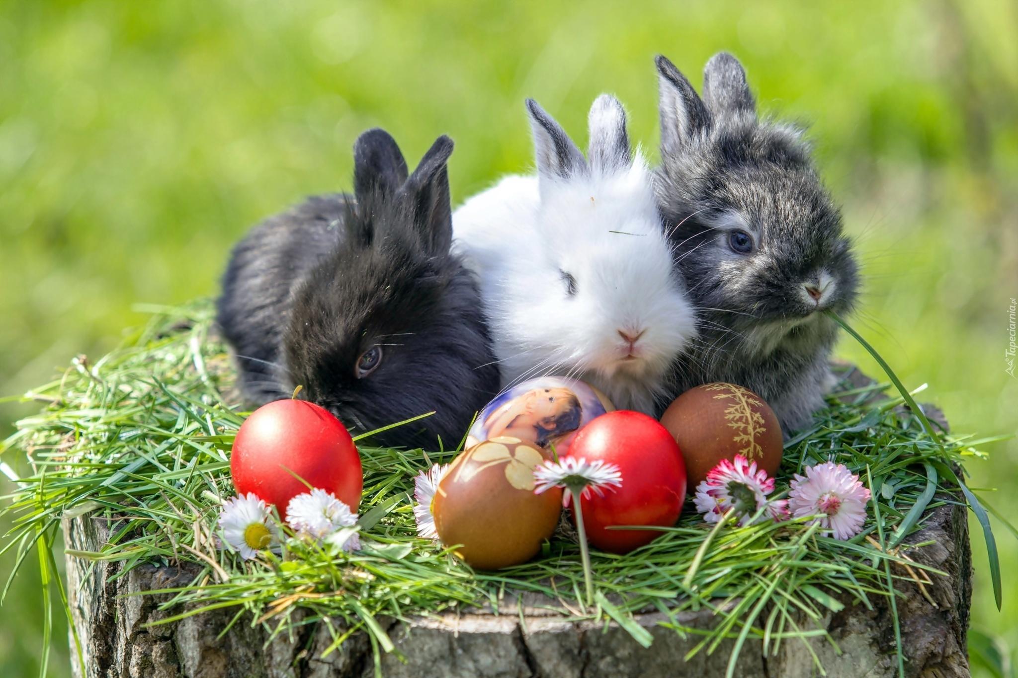 Króliki, Jajka, Wielkanocne, Stokrotki, Trawa, Pień, Drzewa