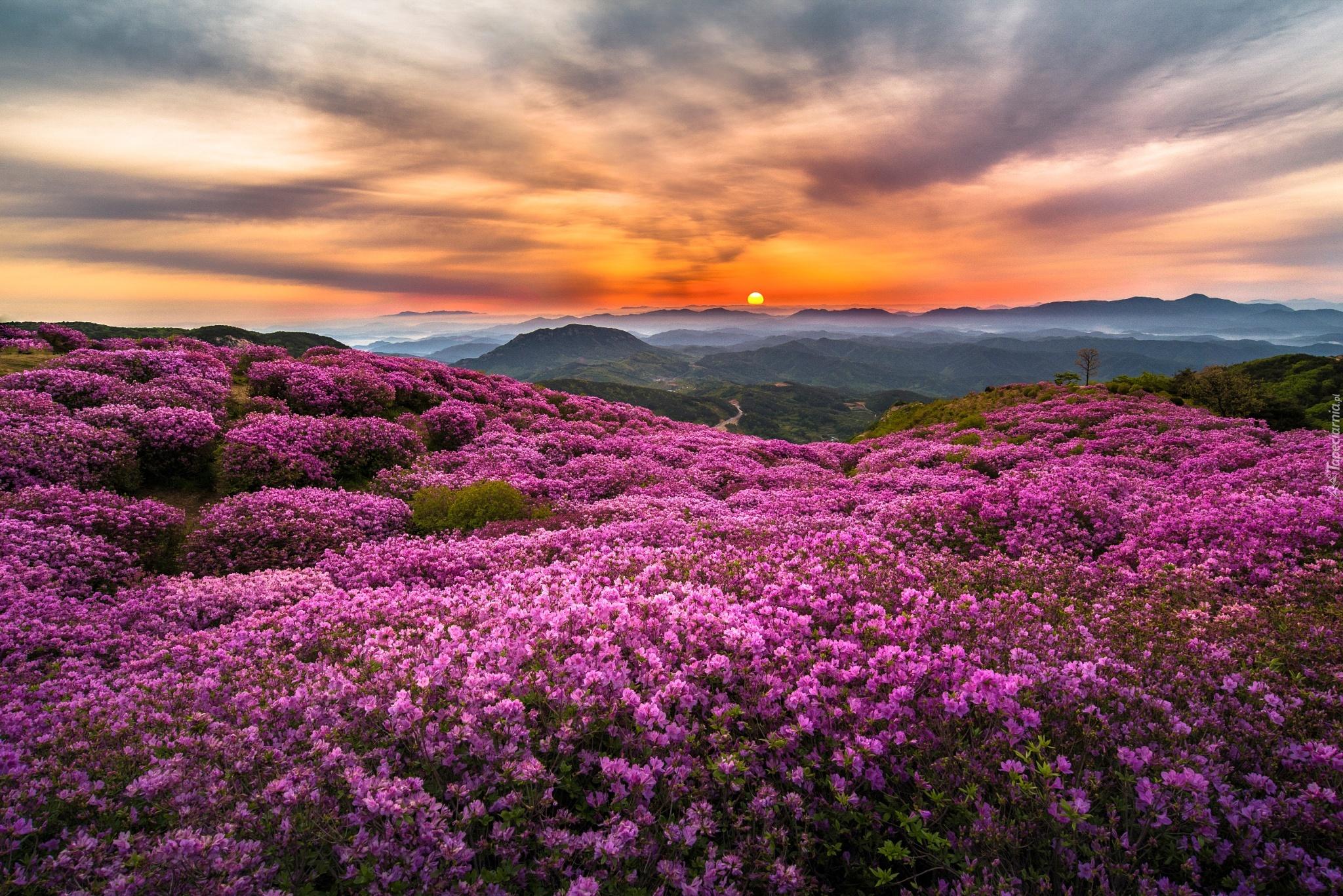 Good Morning Beautiful Korean : Kwiecista Łąka góry wschód słońca mgła