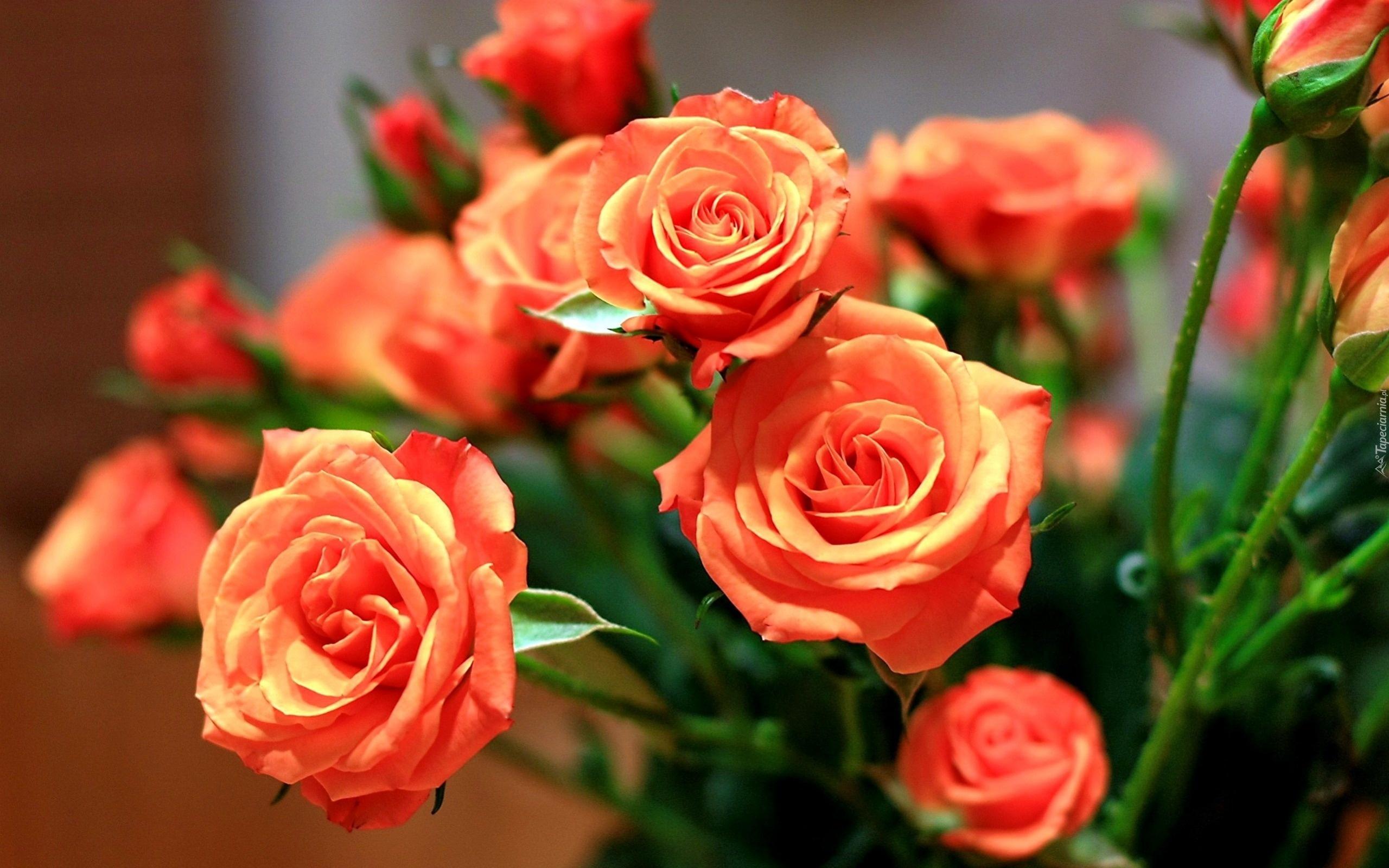 Цветы красавице картинки