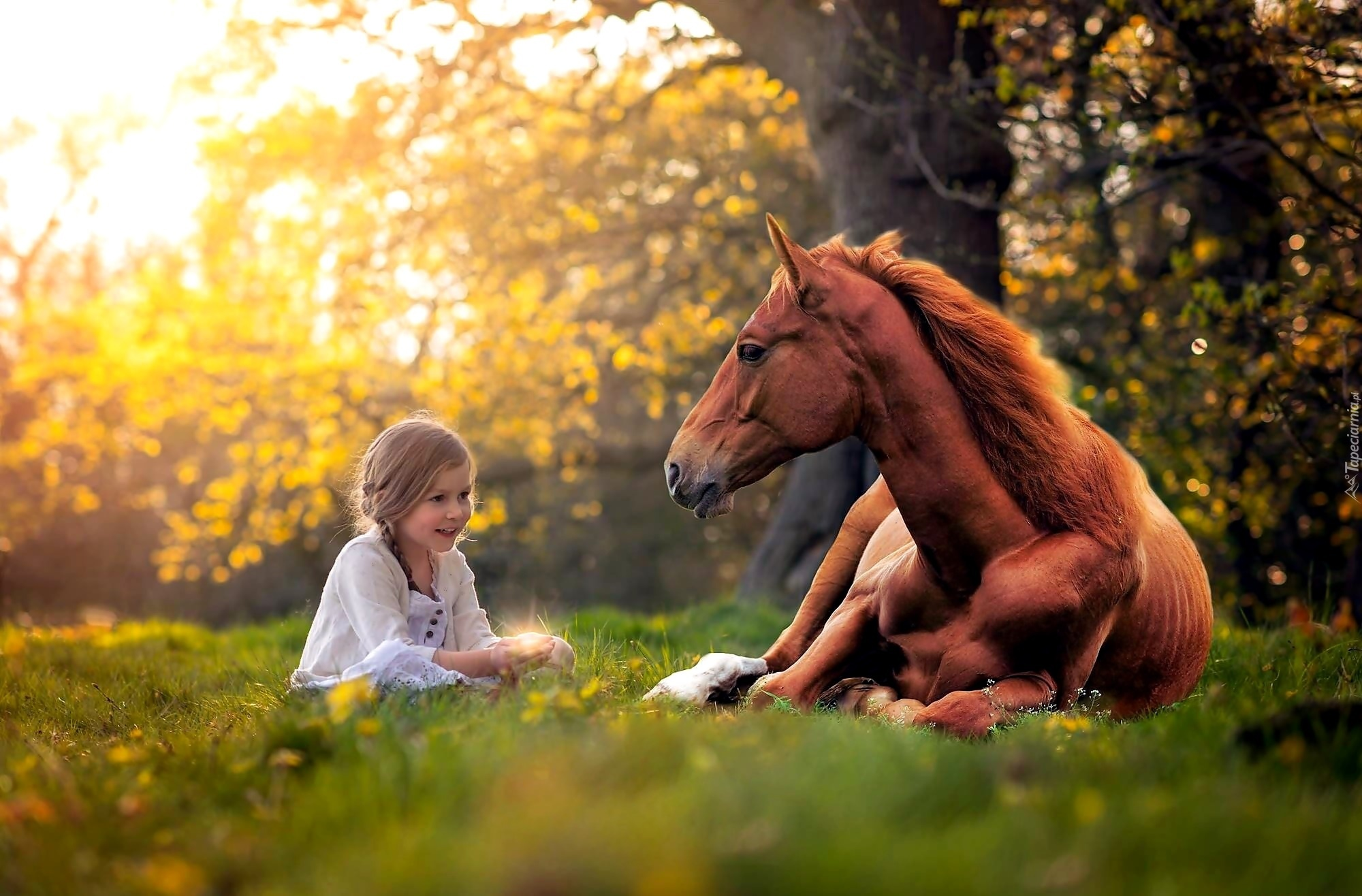 Лёжа на лошади загрузить