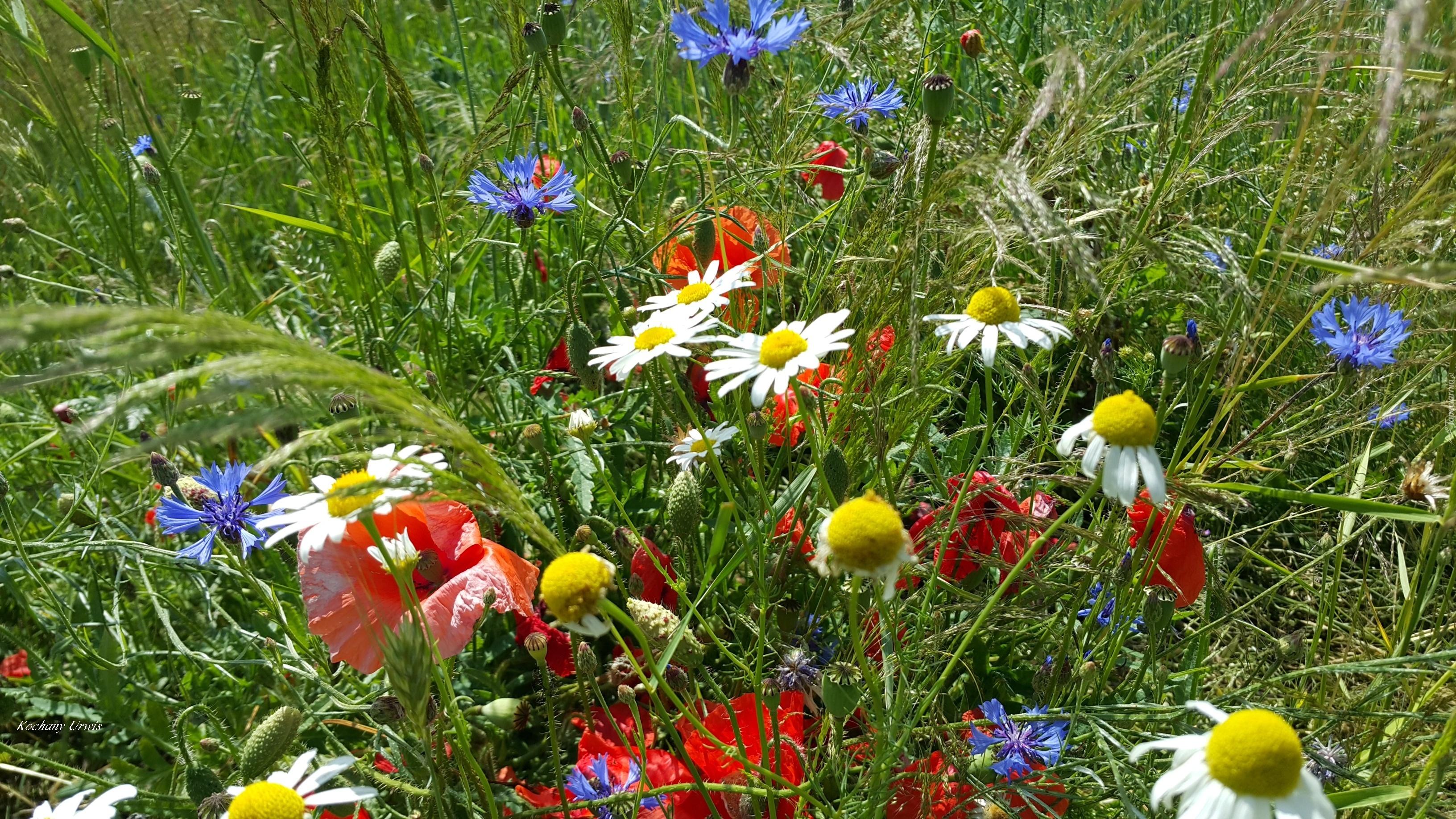 дом или картинки полевые цветы на рабочий стол находках оружия металлоискателем