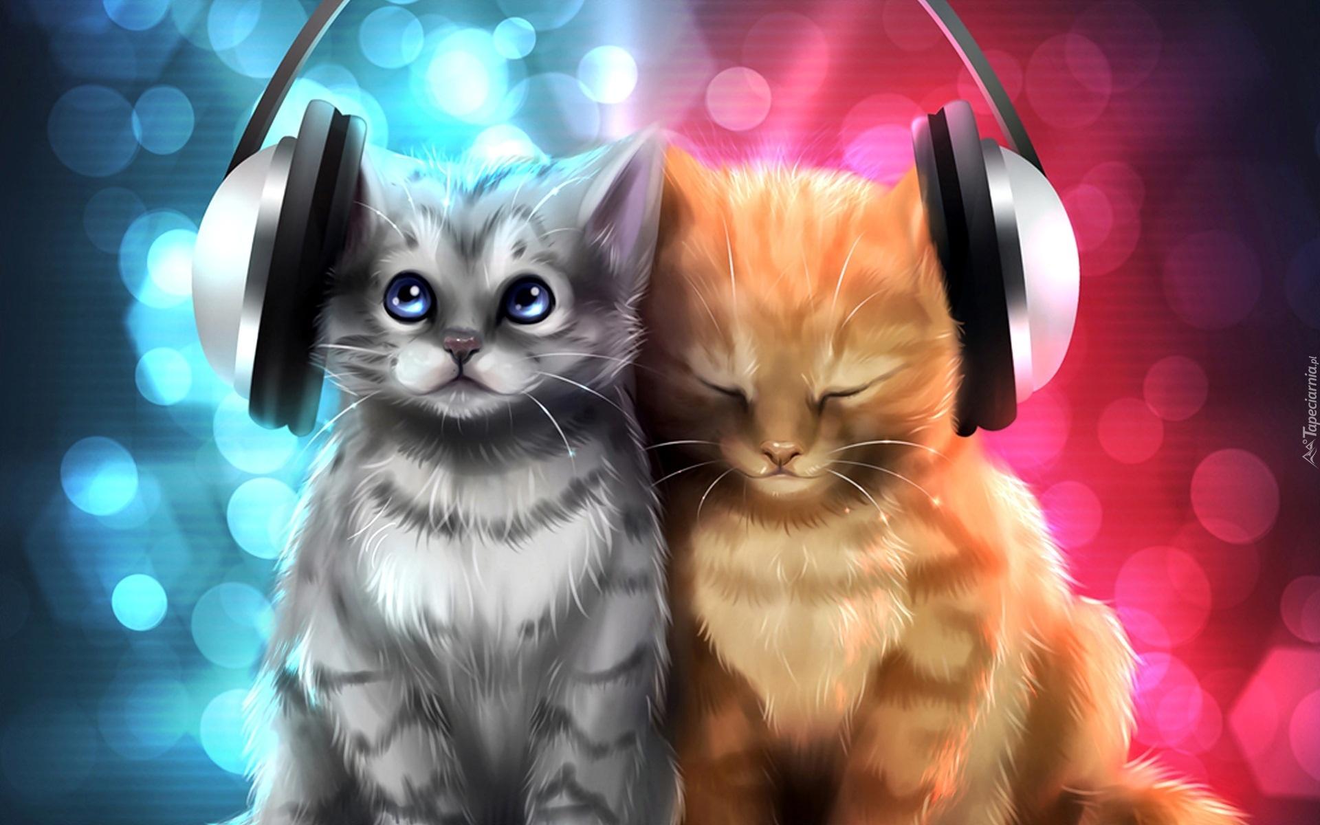Dwa, Kotki, Słuchawki, Śmieszne