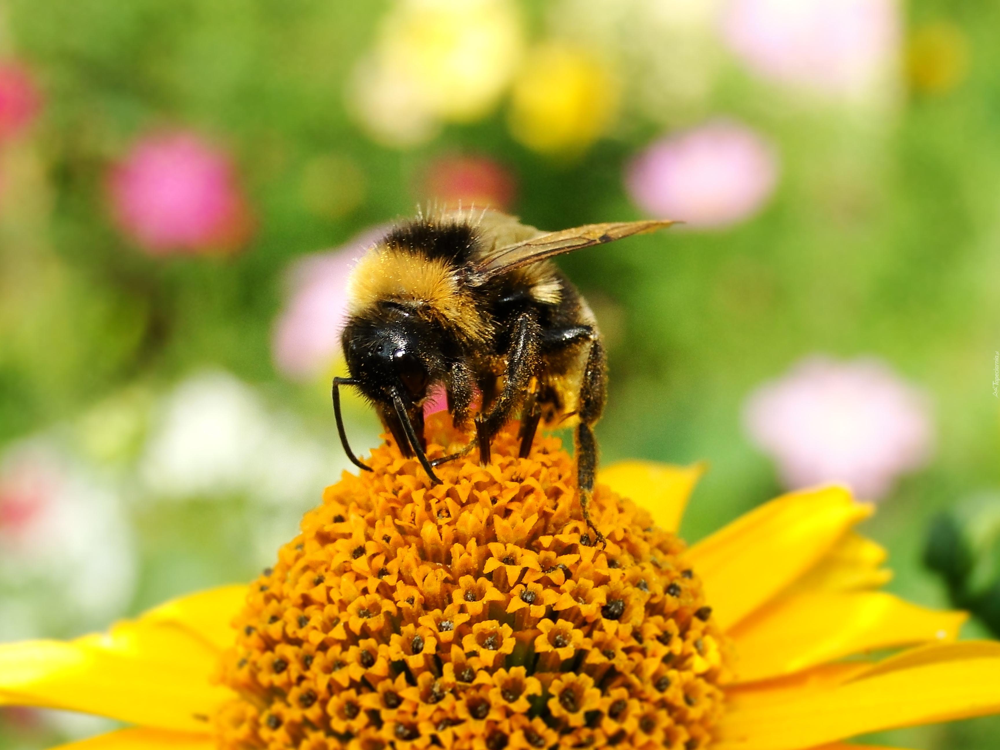 Картинки о пчелах и детях