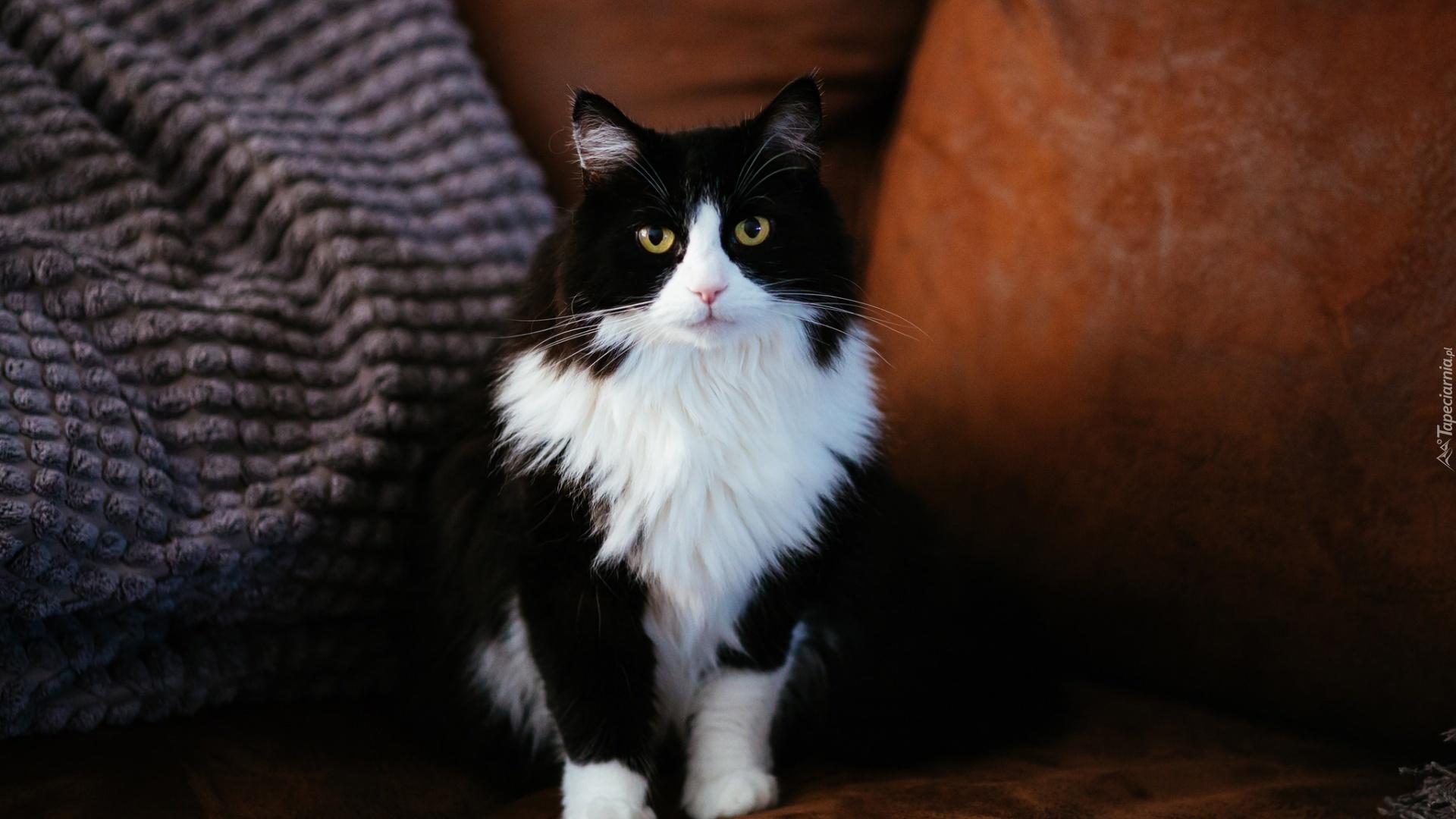 Kot Czarno Biały