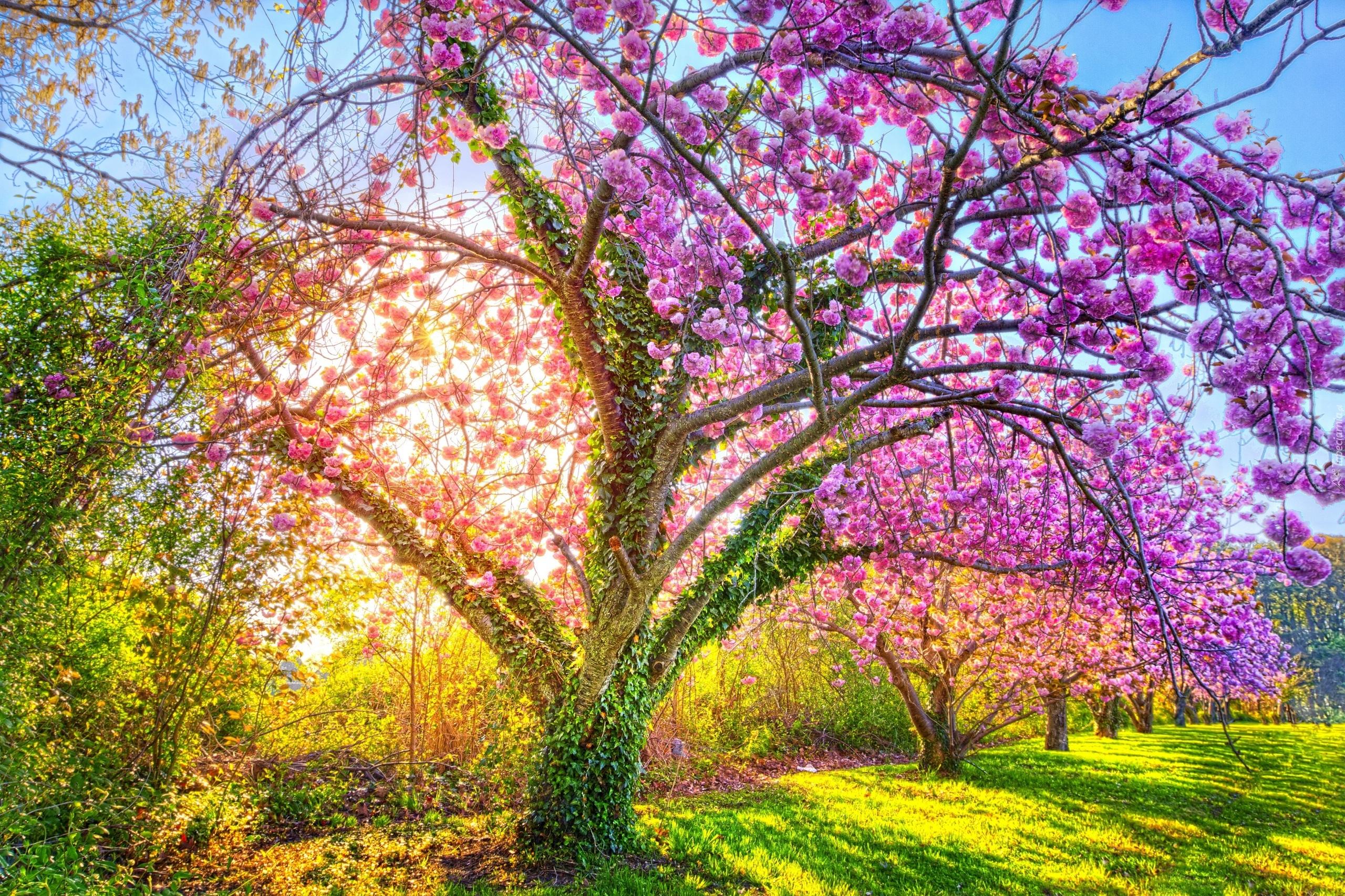 Обои на рабочий стол природа цветение весна деревья цветы