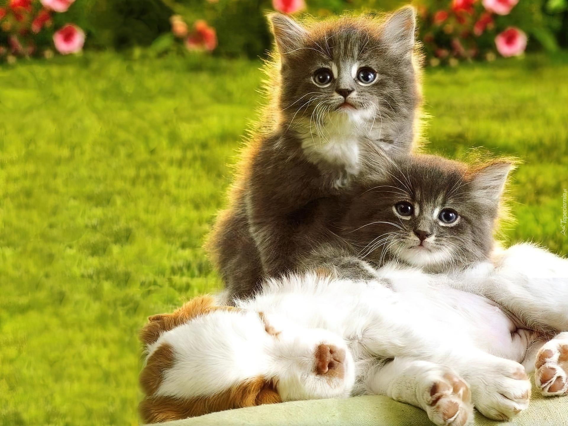 Доброе, собачки фото красивые пушистые милашки котята