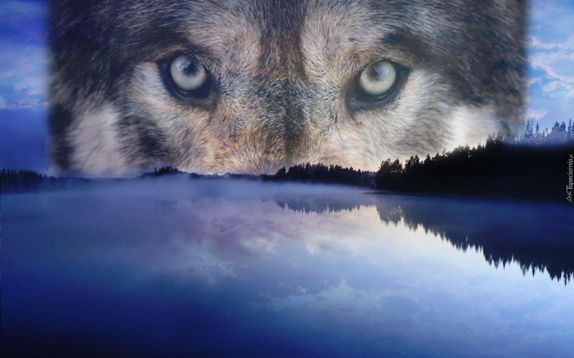 Картинки с волками афоризмами