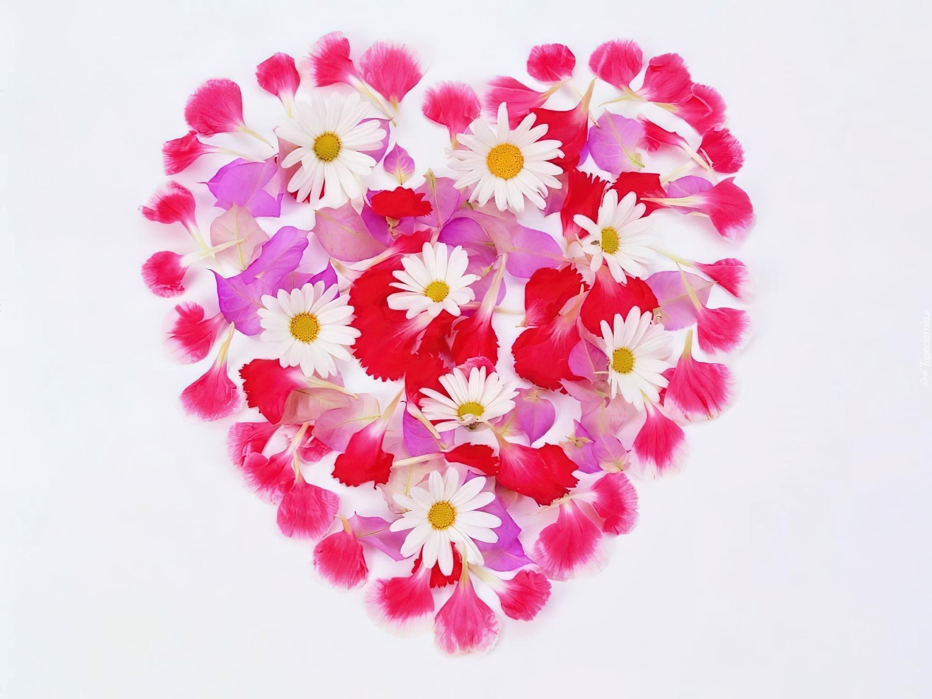 Kwiatki, Serce, Walentynki