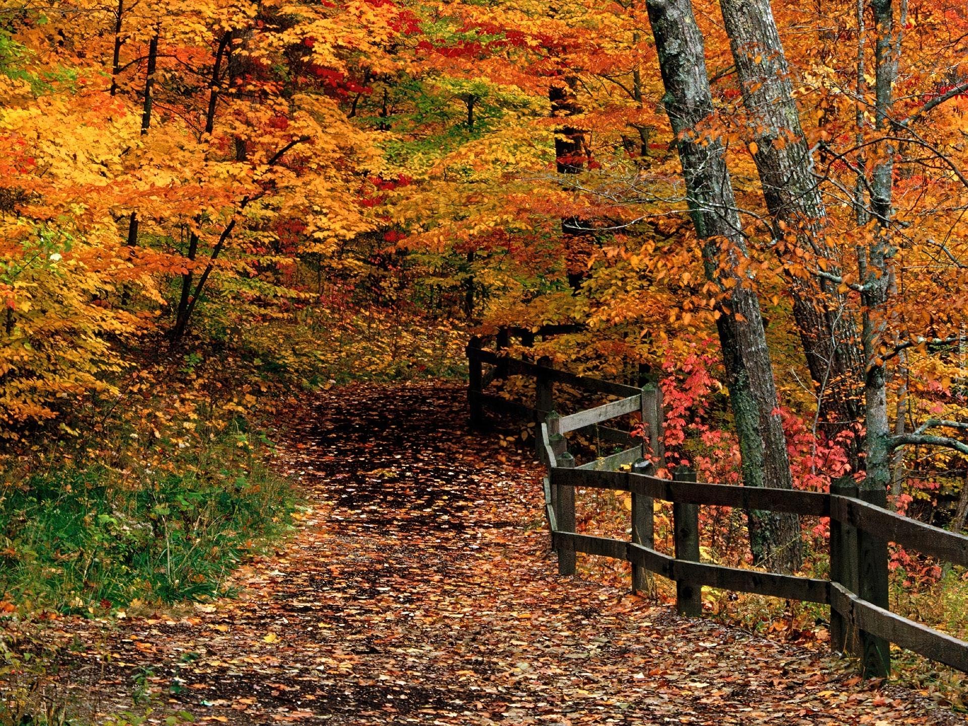 Las jesieni te pomara czowe li cie drzew for Immagini autunno hd