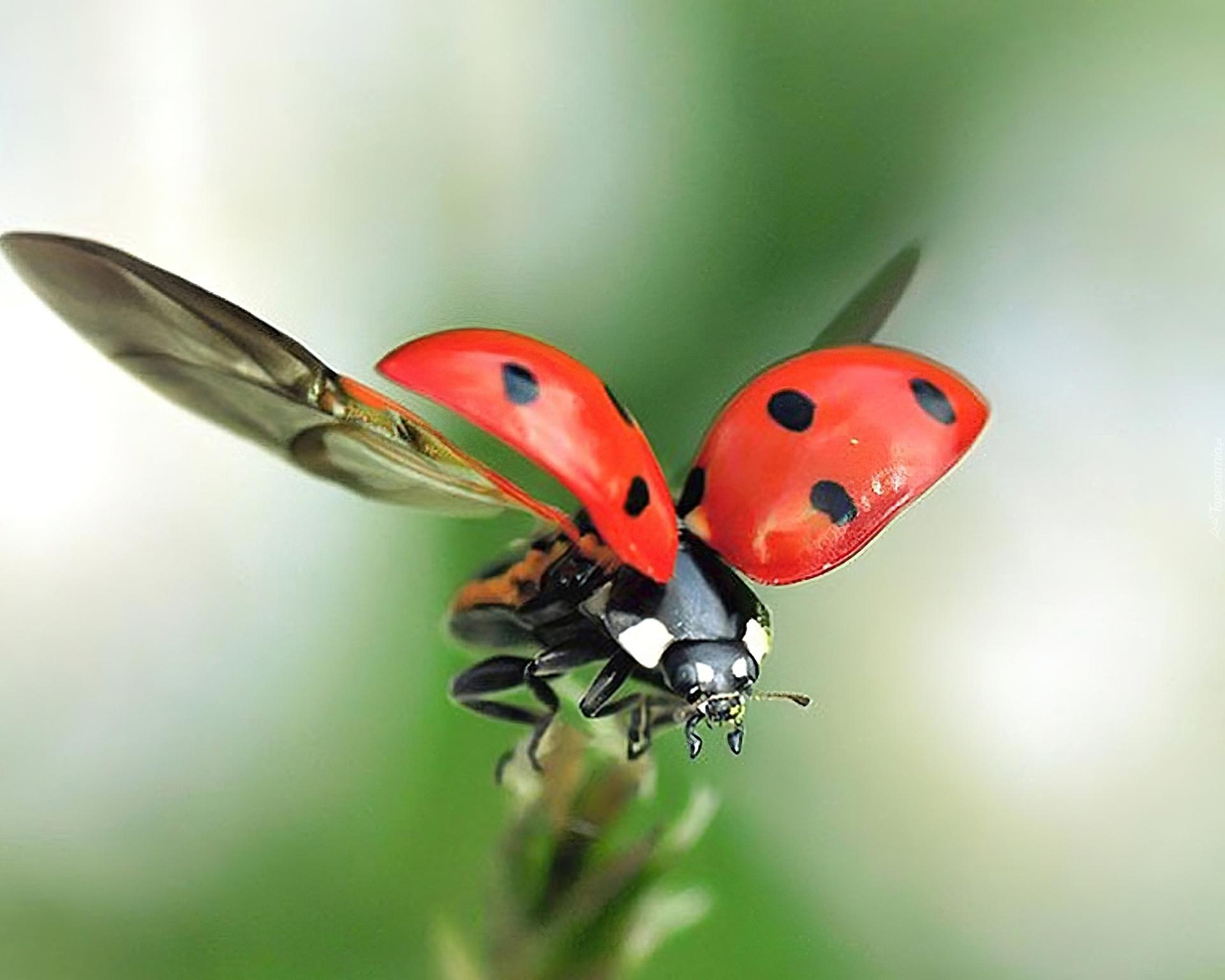посещении картинка жук летит к цветку модели надевают голую