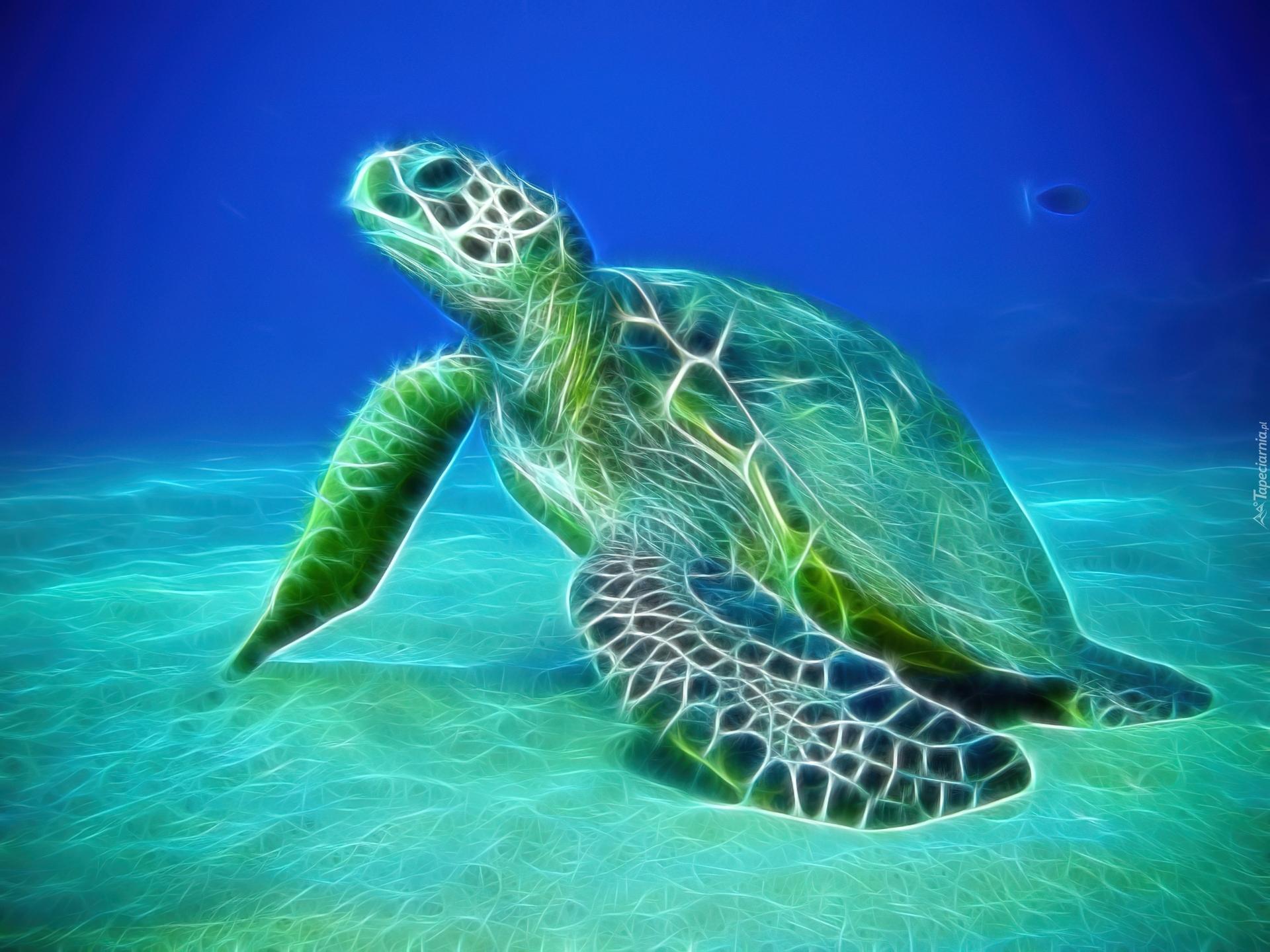 Funny 3d Animal Turtle Wallpapers Hd: Żółw, Wodny, Fractalius