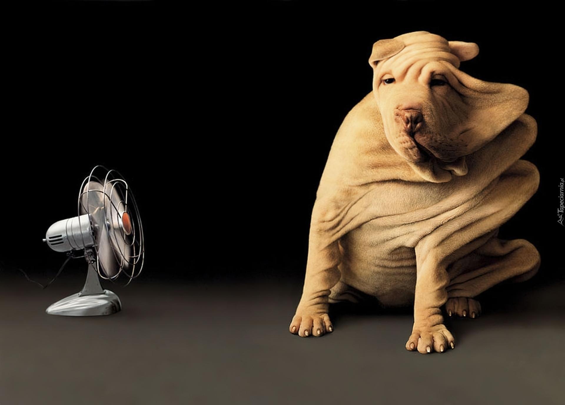 современном интерьере картинка собака с вентилятором удар