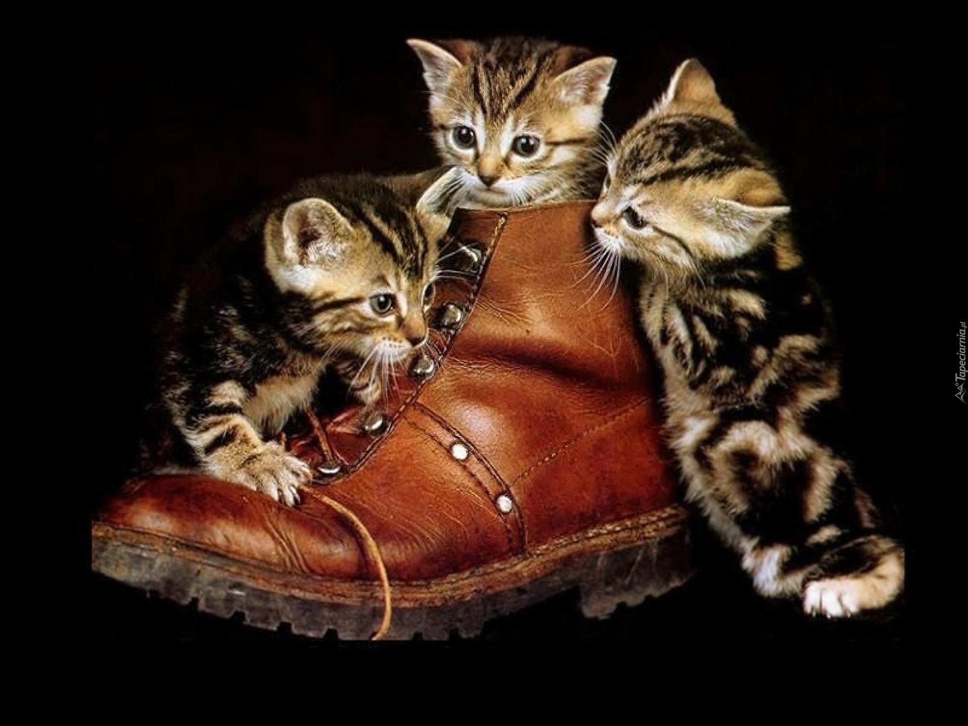 Картинки котята в ботинках