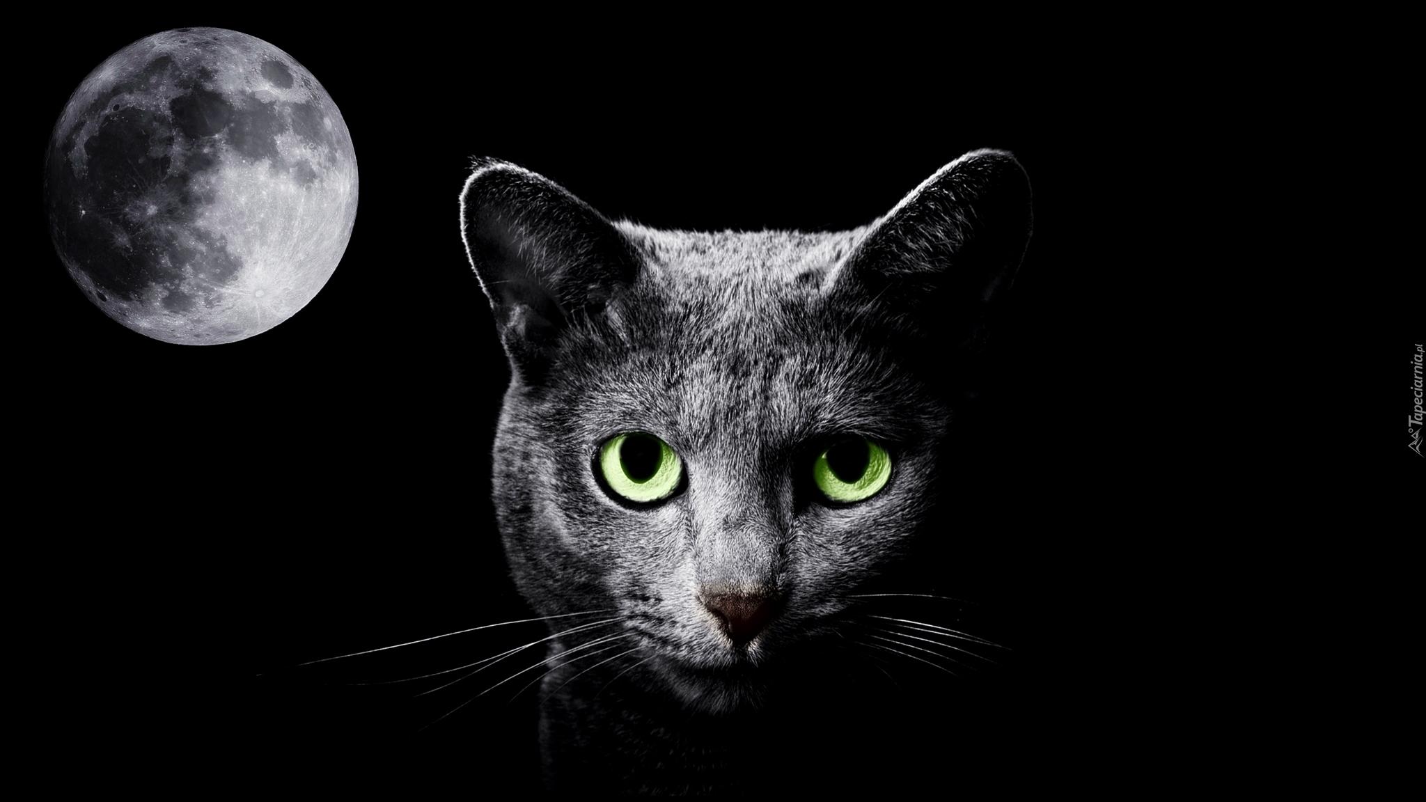 Czarny Kot I Księżyc W 2d