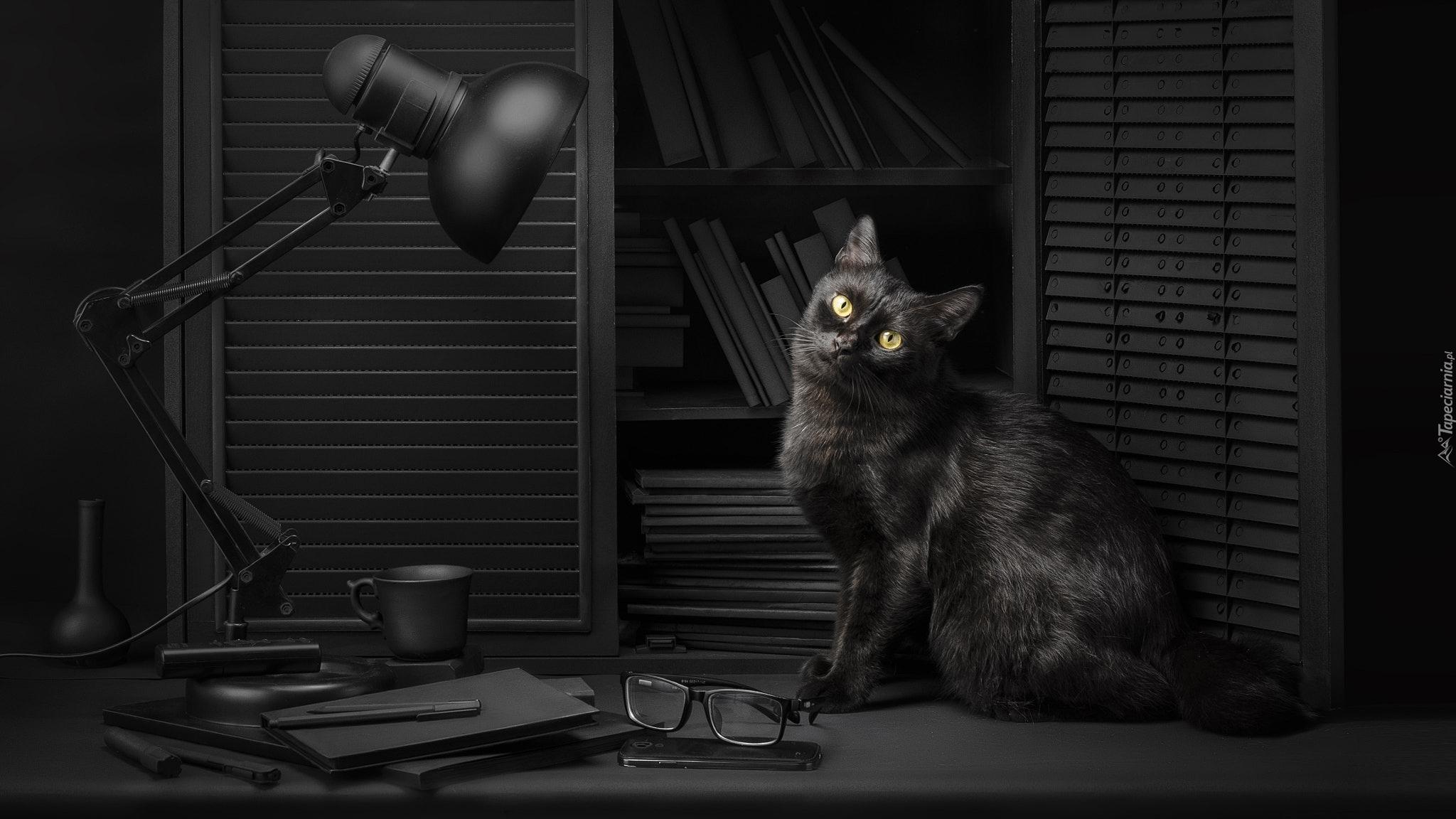 Tapety Kot W Okularach