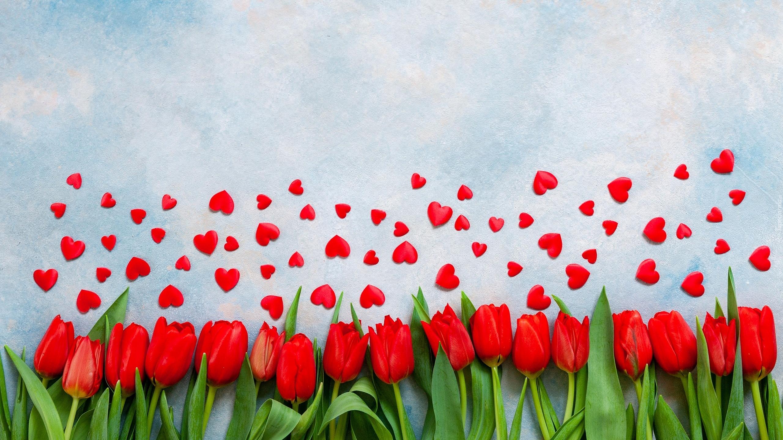 tapeta-czerwone-serduszka-nad-tulipanami.jpg