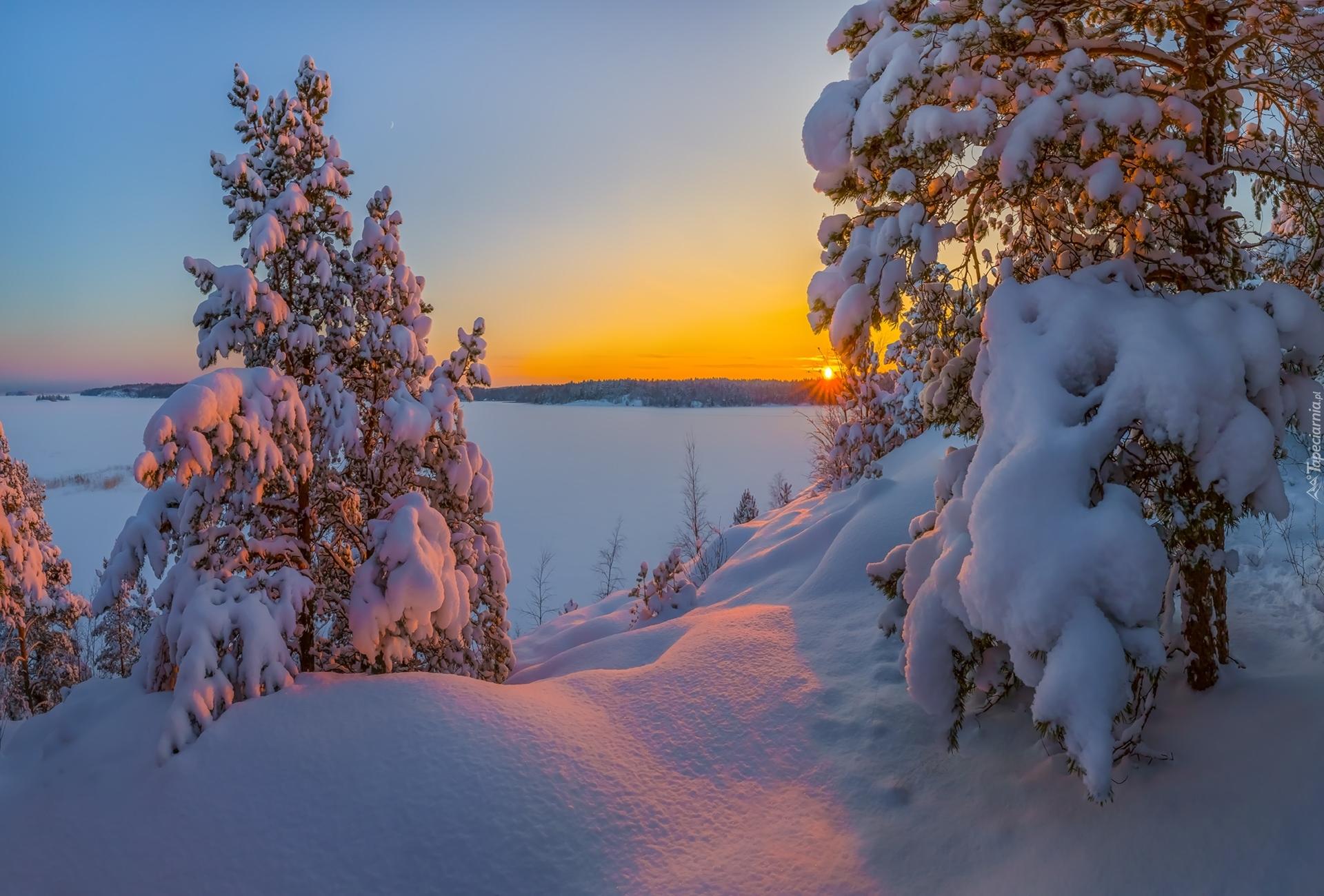 tapeta-drzewa-i-promienie-slonca-w-zimowym-krajobrazie.jpg