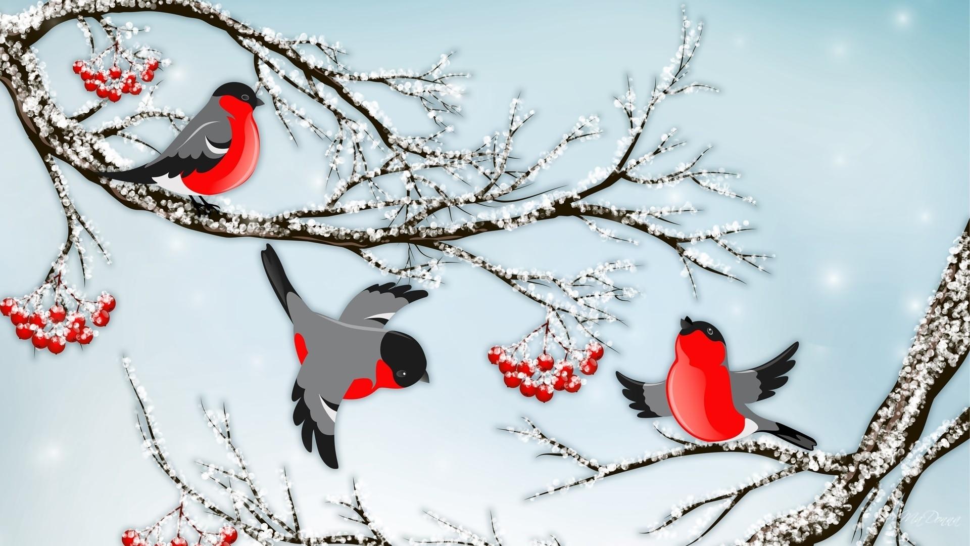 Обои Снегири Зимой Для Рабочего