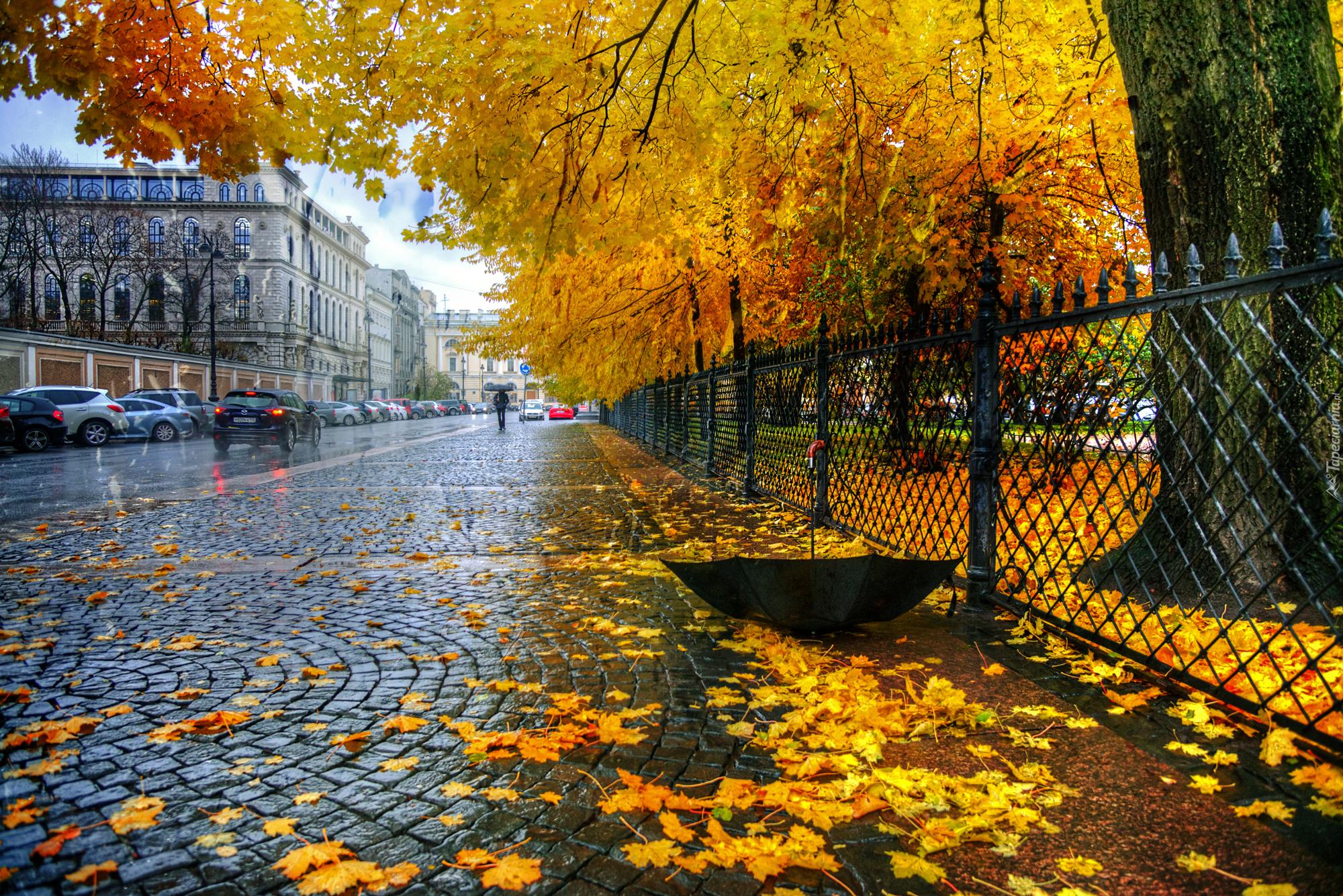 Золотая осень картинки бесплатно