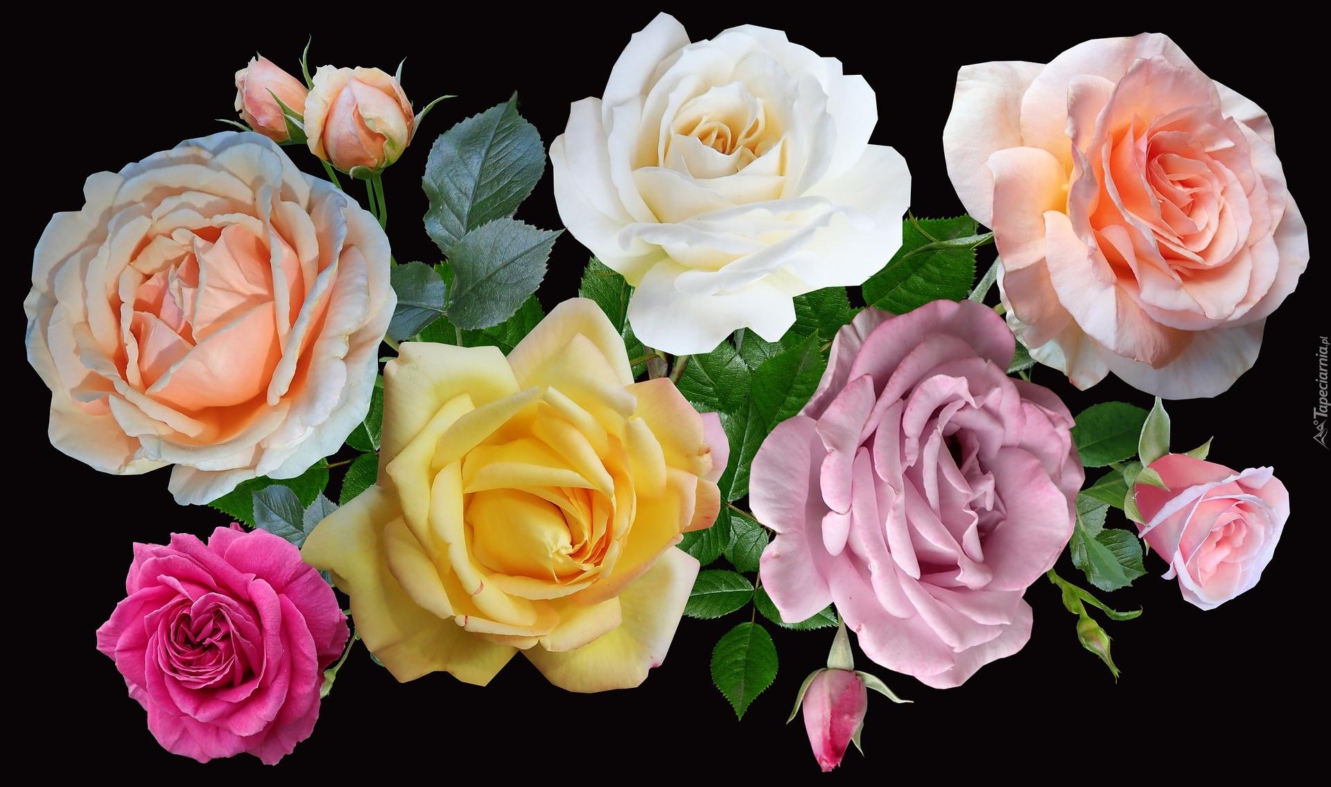 tapeta-kolorowe-roze-na-czarnym-tle.jpg