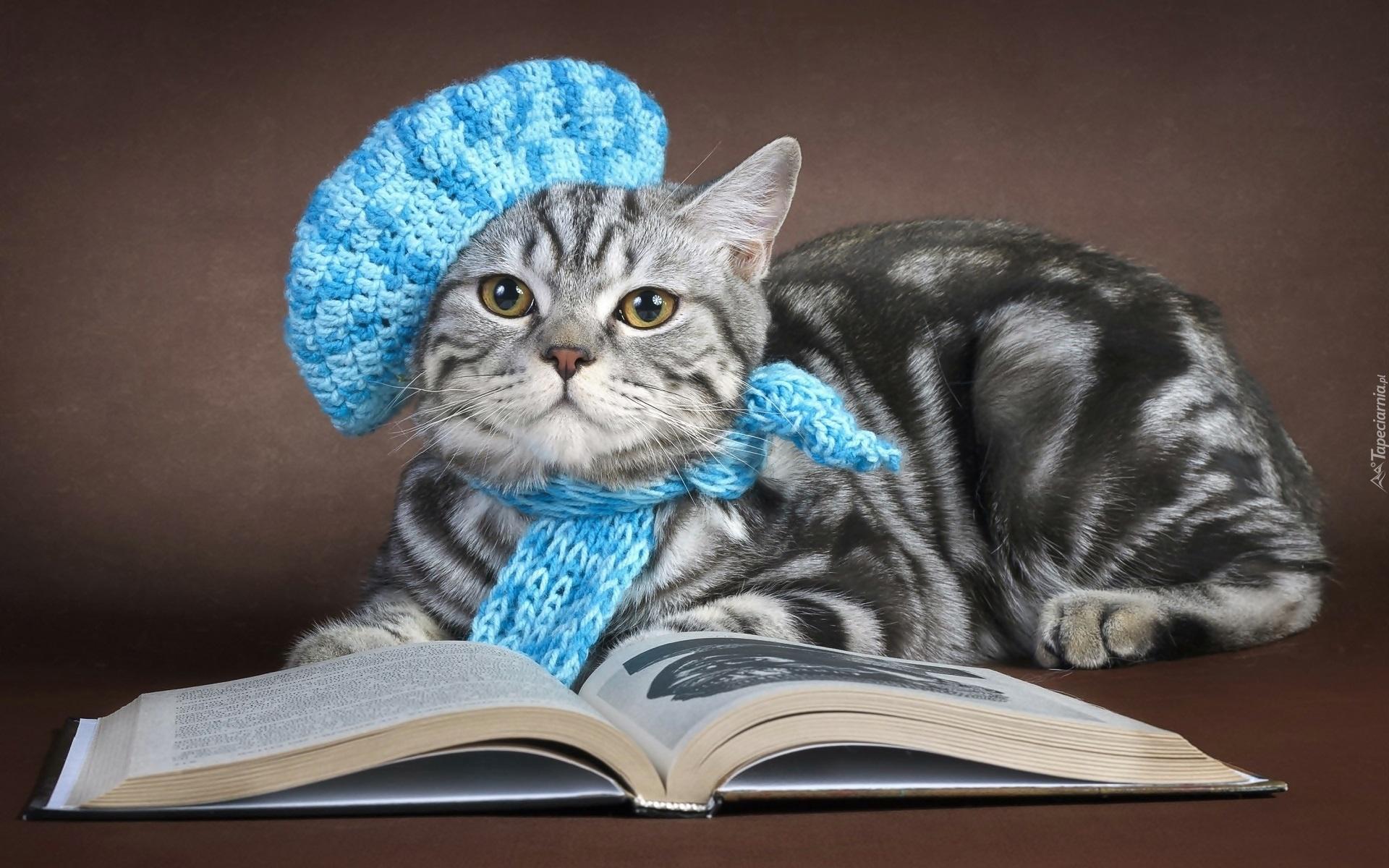Kot W Berecie I Szaliku Z Włóczki
