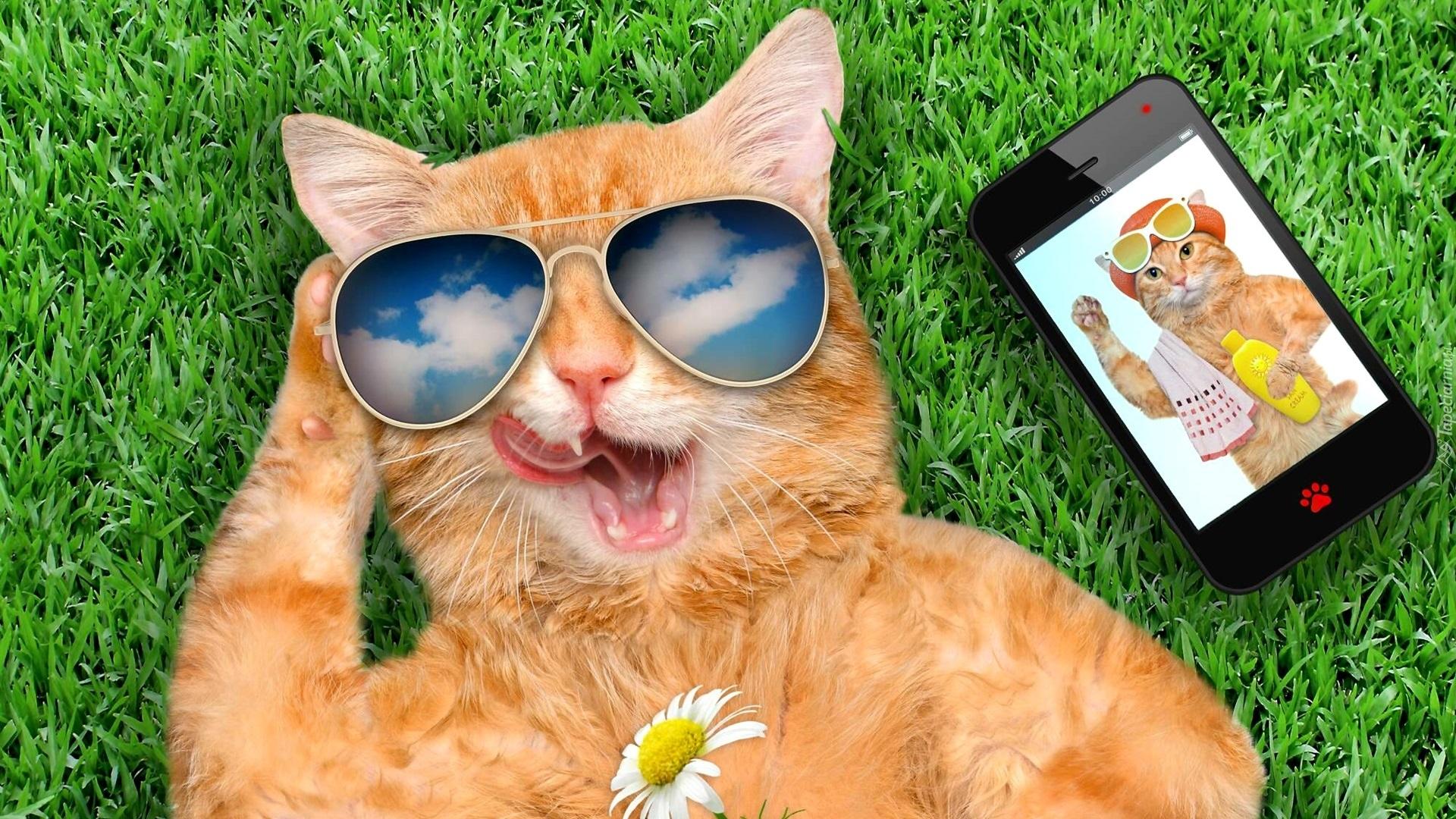 Kot W Okularach Przeciwsłonecznych Relaksuje Się Na Trawie Obok Telefonu