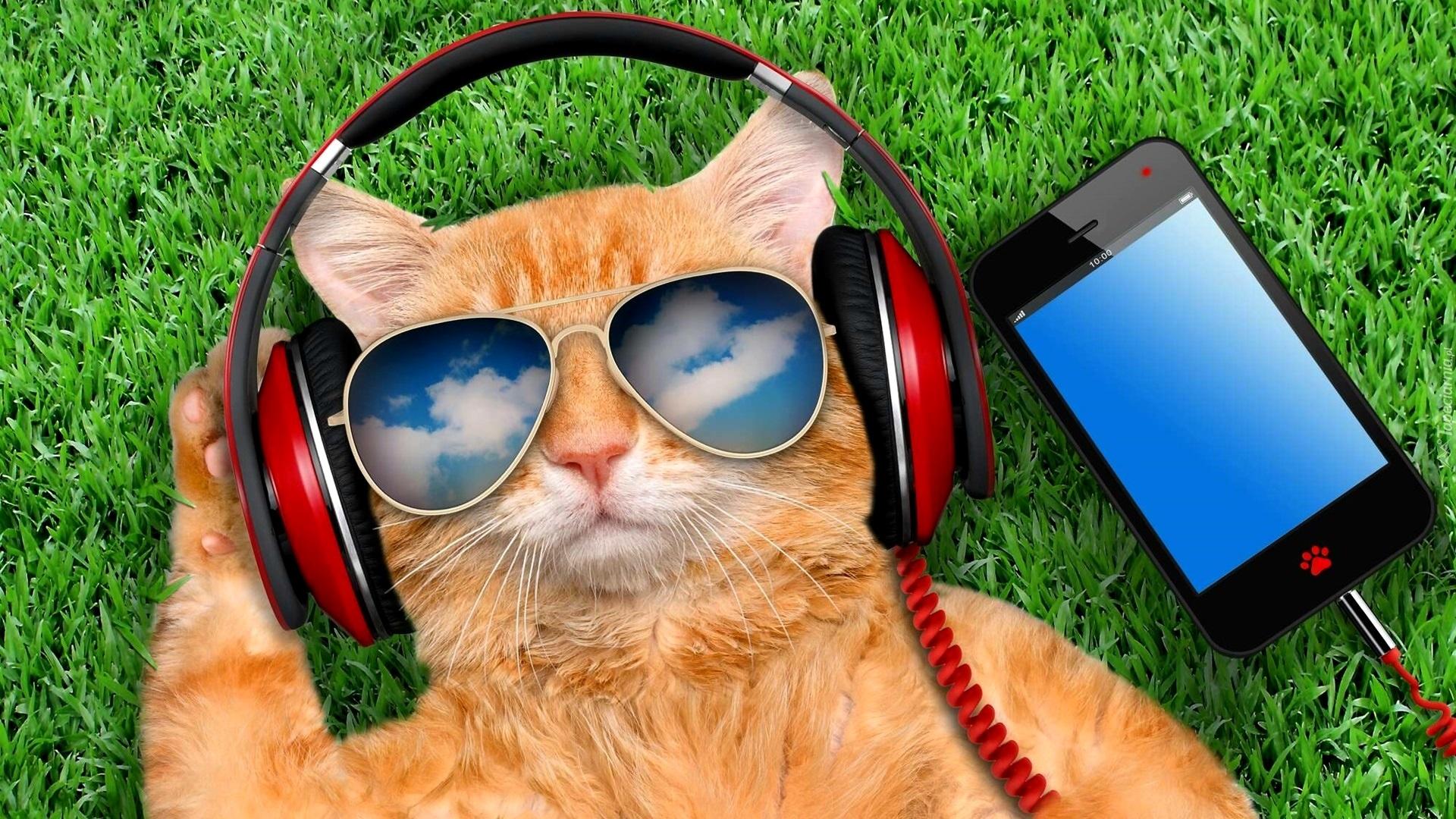 Kot W Okularach Przeciwsłonecznych Ze Słuchawkami Na Uszach