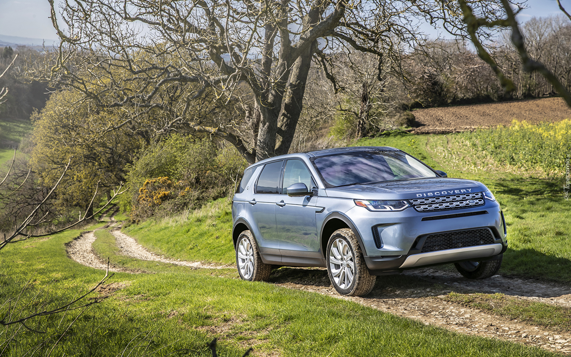 Land Rover Discovery Sport, Droga, Drzewa
