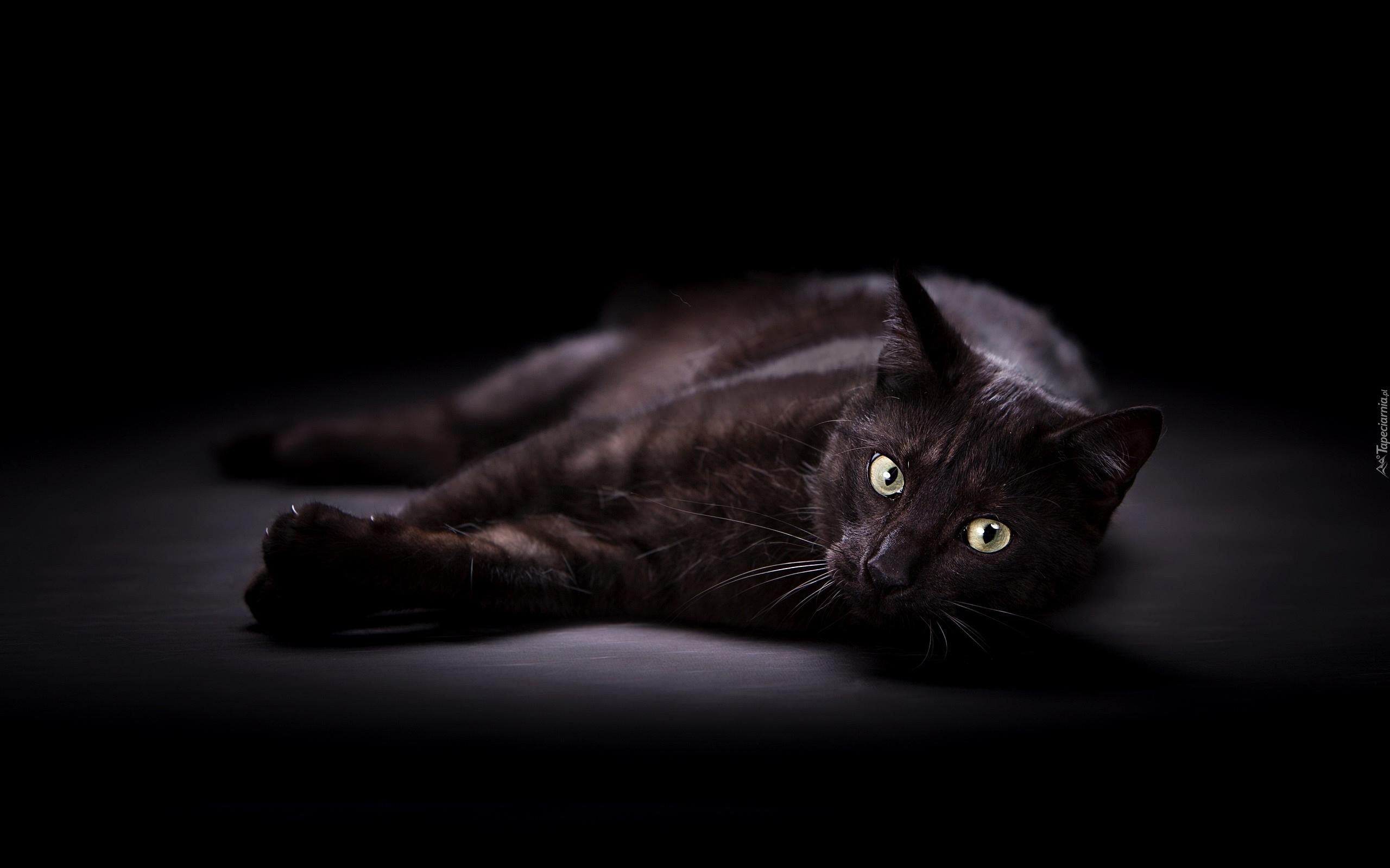 Leżący Czarny Kot