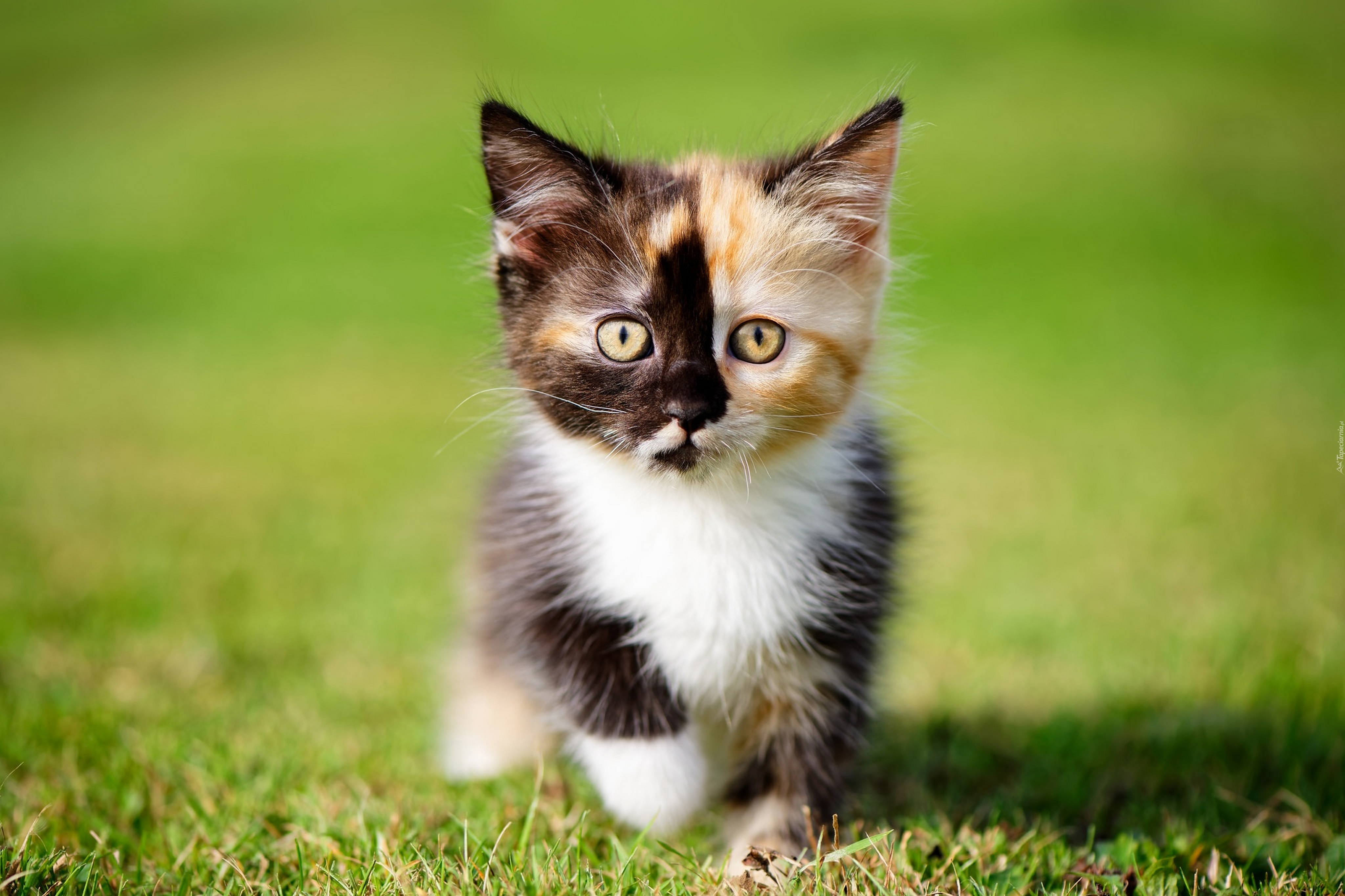 Cute White Cat Images Hd