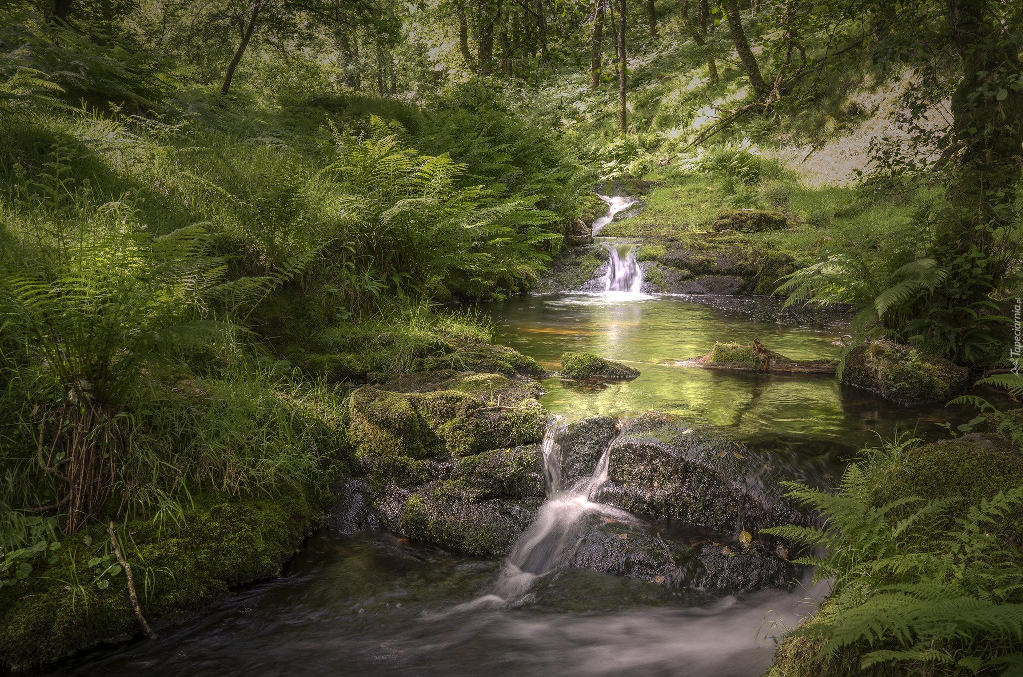 tapeta-omszale-kamienie-i-paprocie-przy-lesnym-potoku.jpg