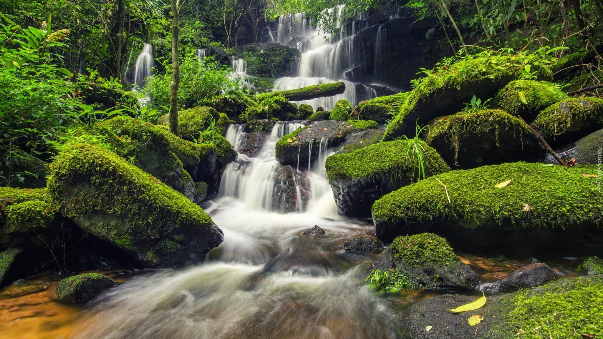 Omszałe Kamienie Przy Wodospadzie