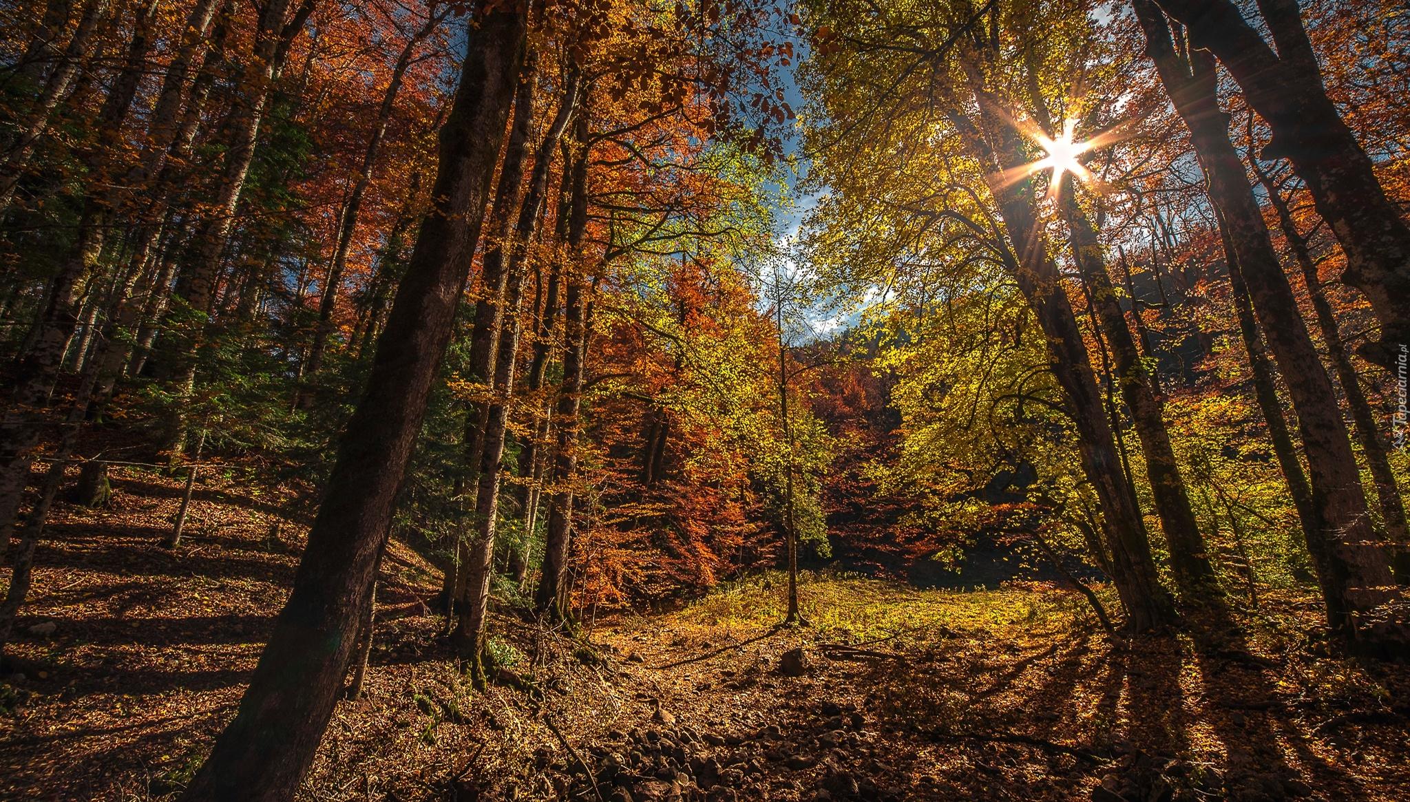 tapeta-park-narodowy-biogradska-gora-w-czarnogorze.jpg