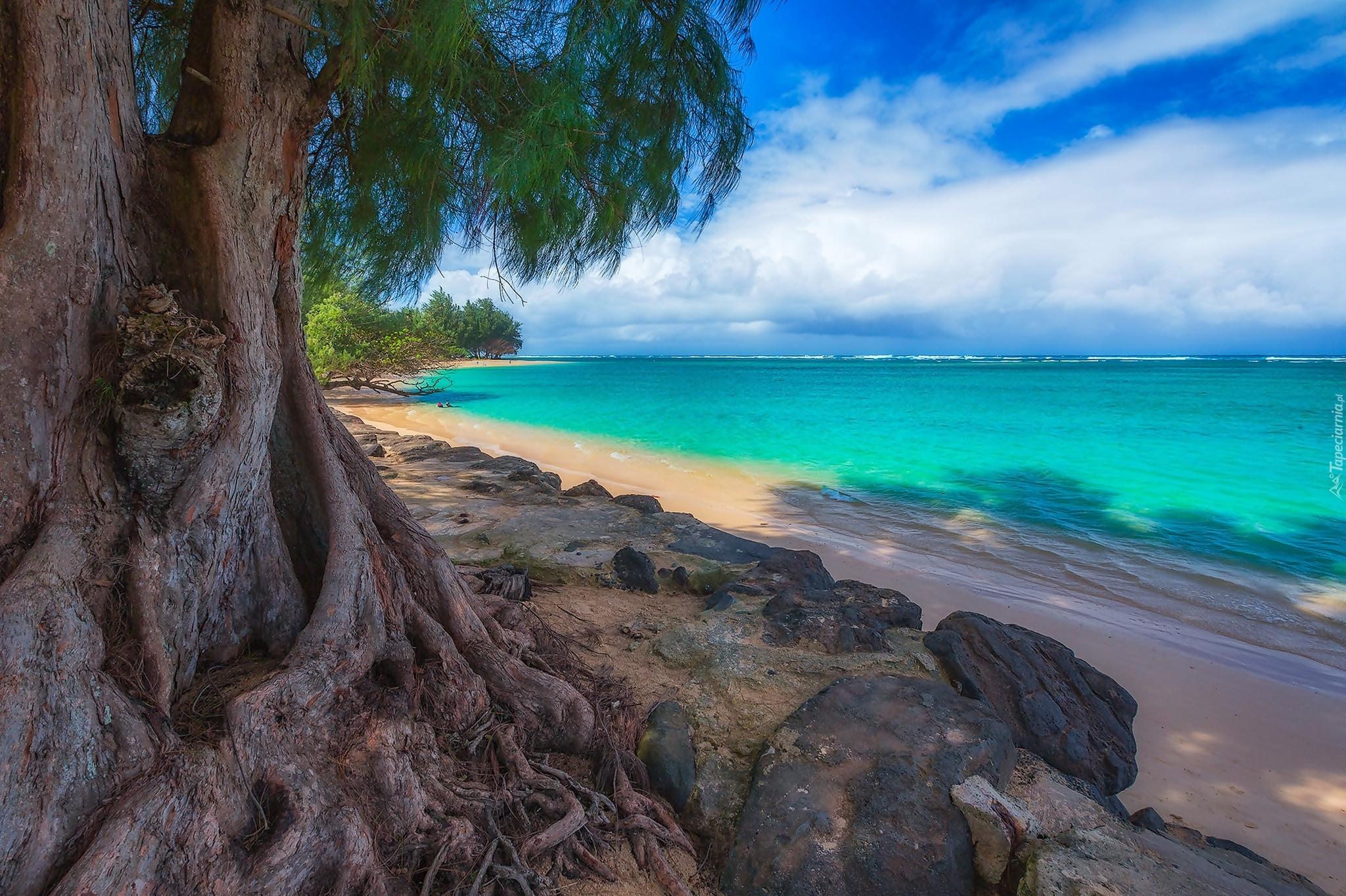 Kealia Shoreline, Kauai, Hawaii скачать