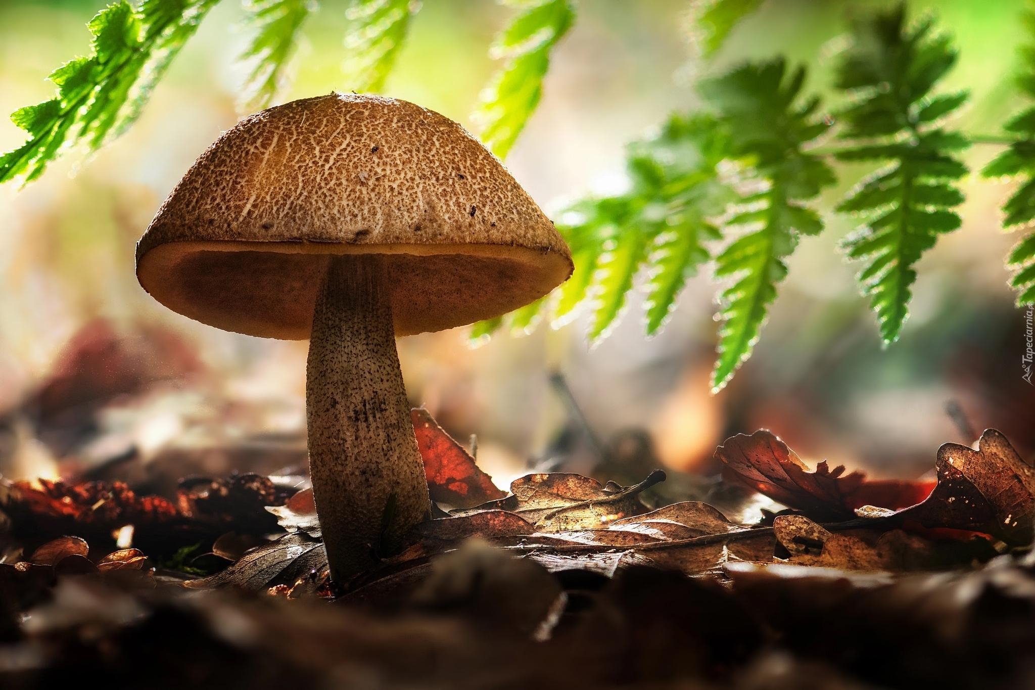 грибы природа осень листья скачать