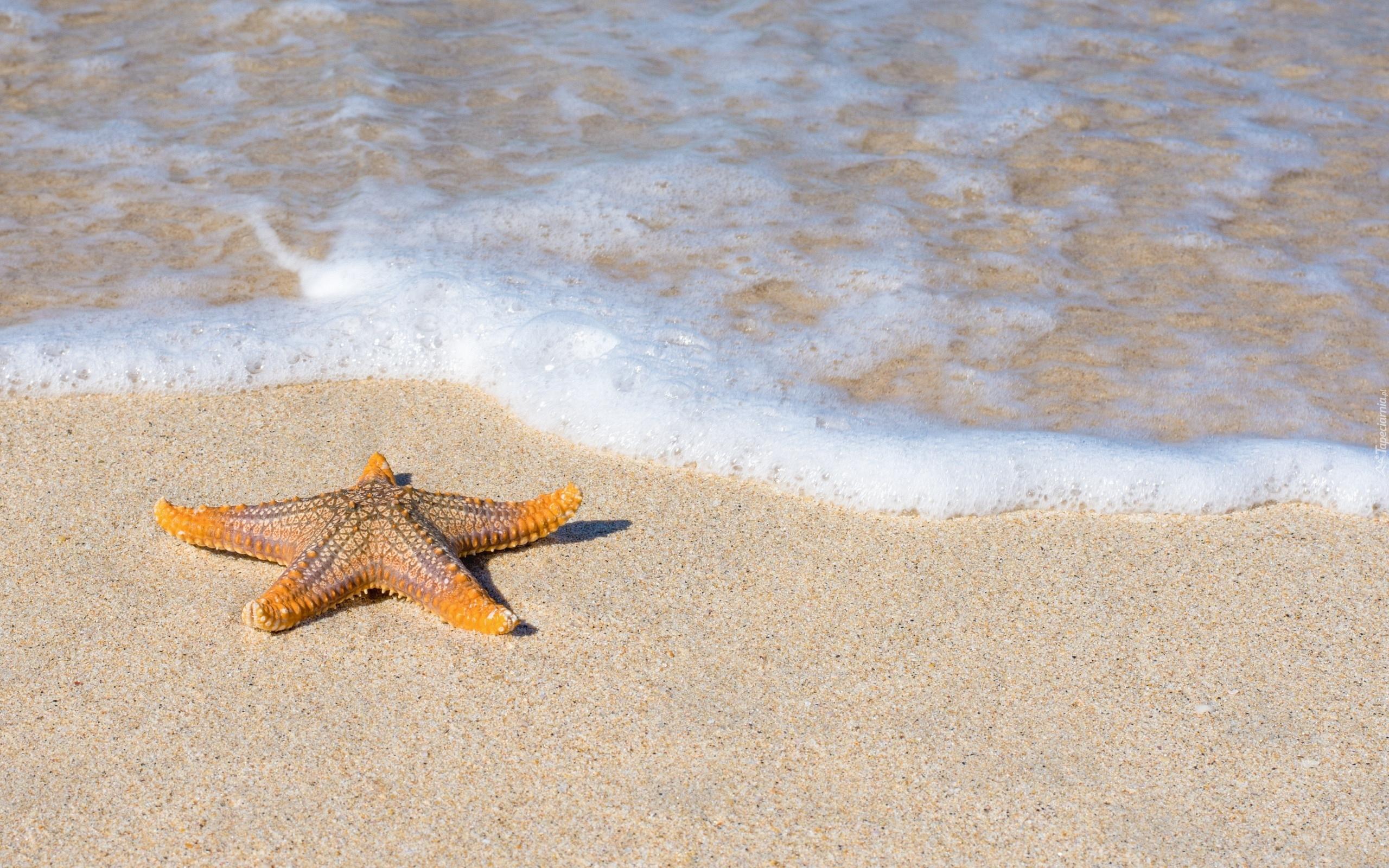 Приснилось: море пляж – увидеть во сне пляж летом – значит в ближайшее время вас завалят сложной работой.