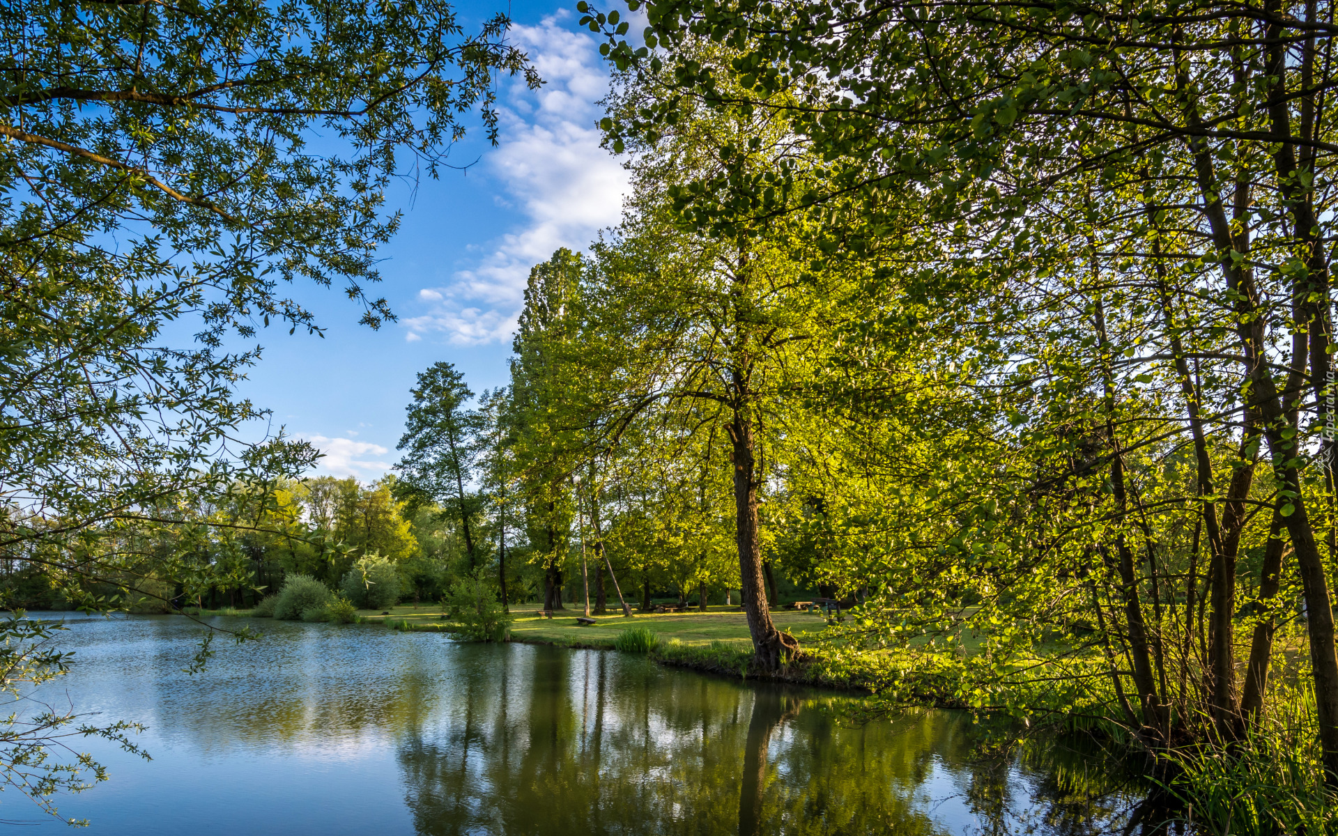 tapeta-rozswietlone-sloncem-zielone-drzewa-nad-jeziorem-w-parku.jpg